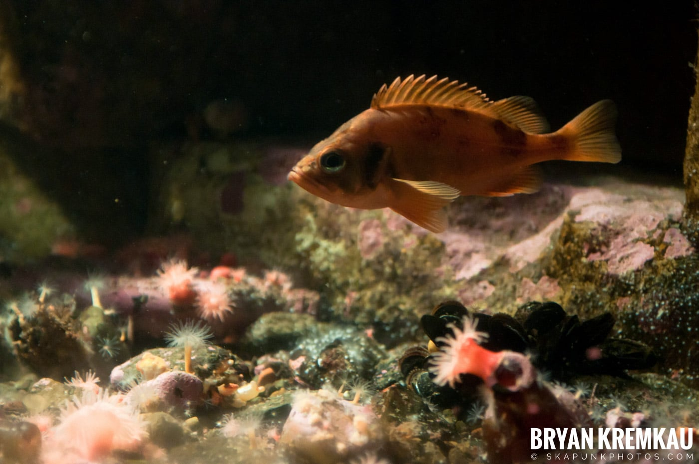 New England Aquarium @ Boston, MA - 6.2.12 (18)