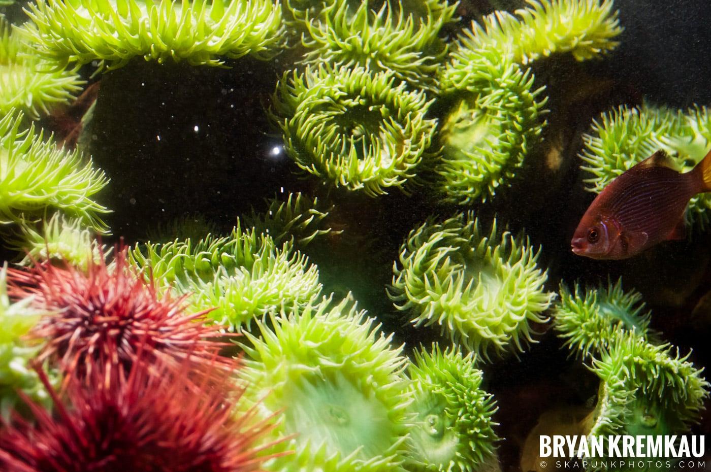 New England Aquarium @ Boston, MA - 6.2.12 (17)