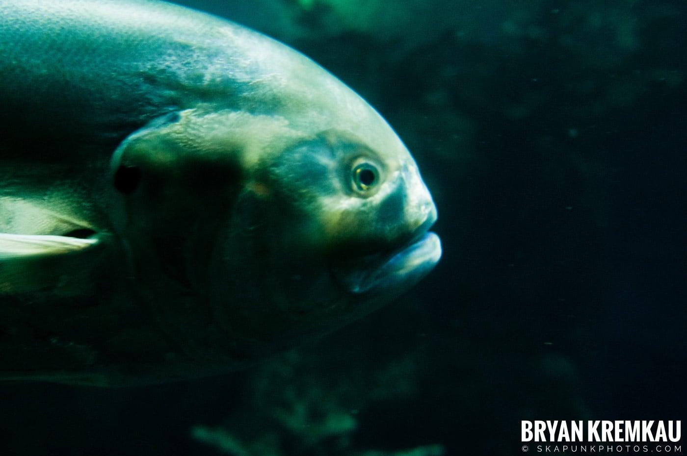 New England Aquarium @ Boston, MA - 6.2.12 (16)