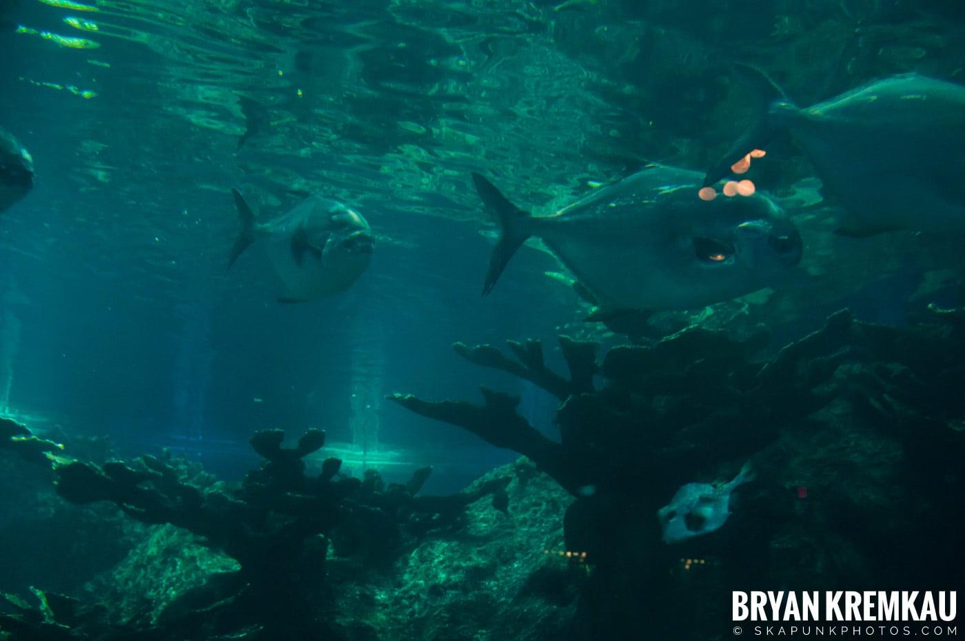 New England Aquarium @ Boston, MA - 6.2.12 (15)