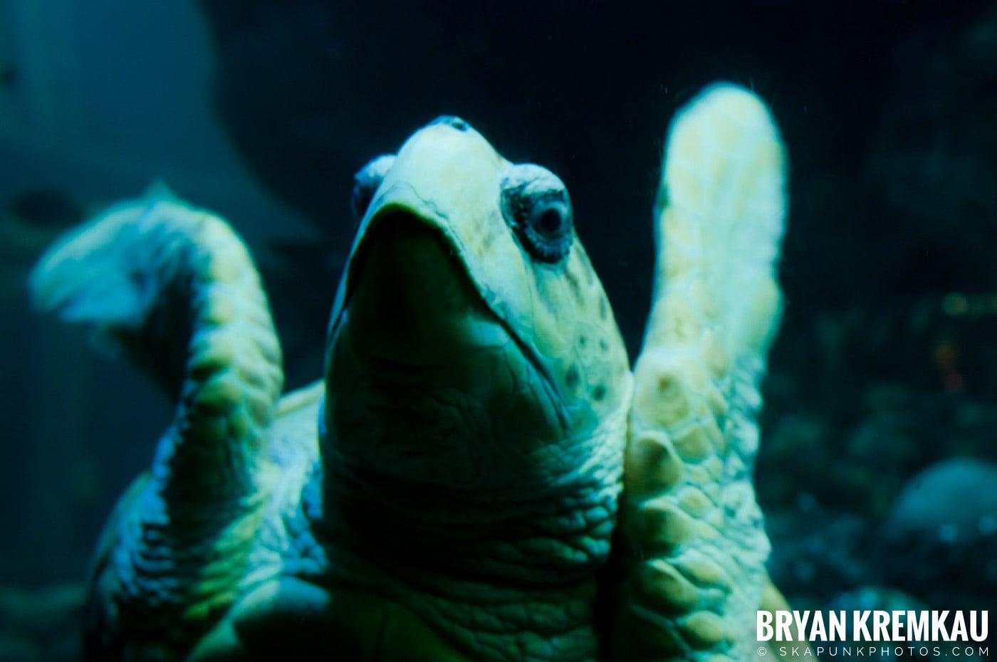 New England Aquarium @ Boston, MA - 6.2.12 (12)