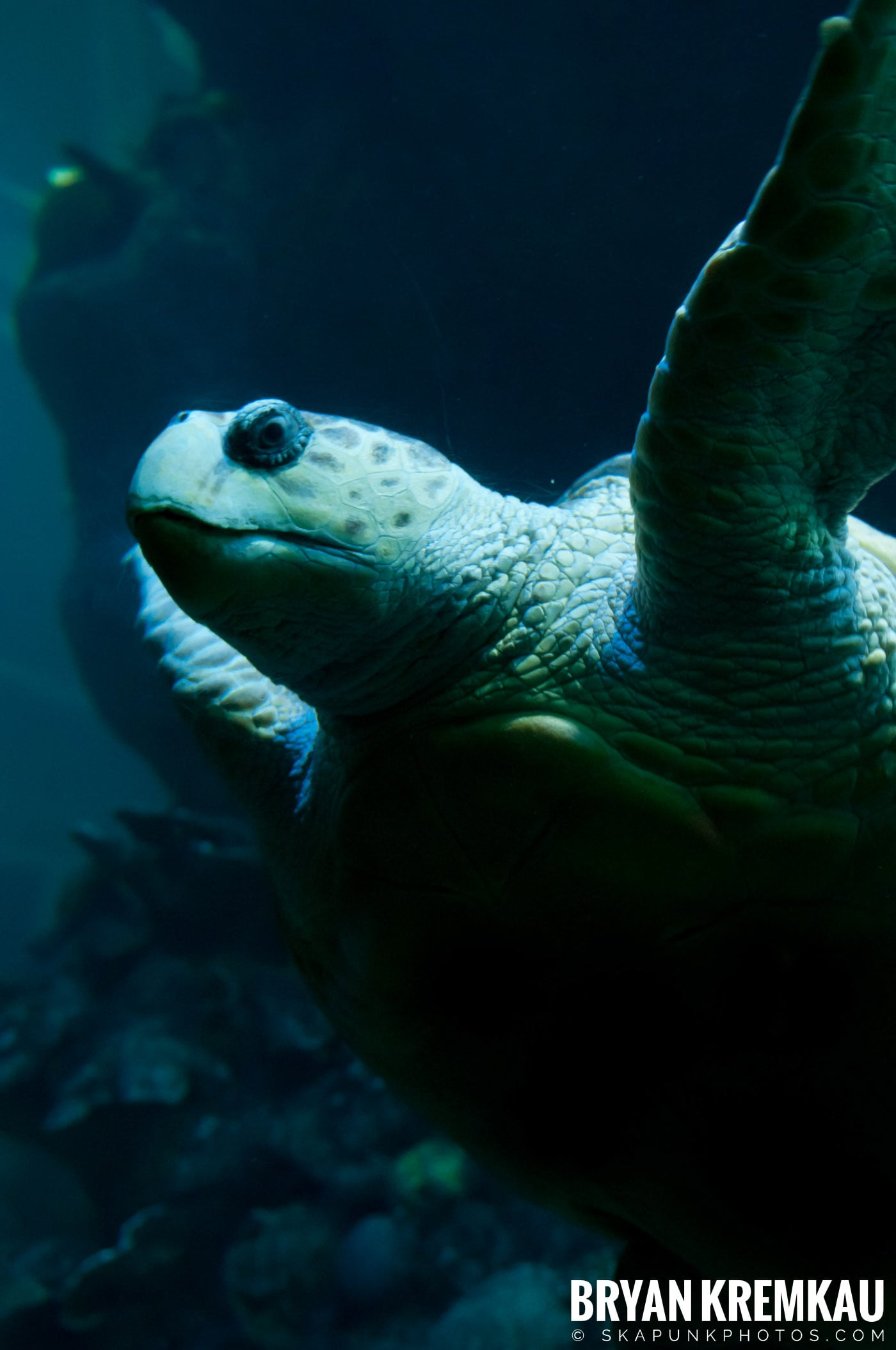 New England Aquarium @ Boston, MA - 6.2.12 (11)