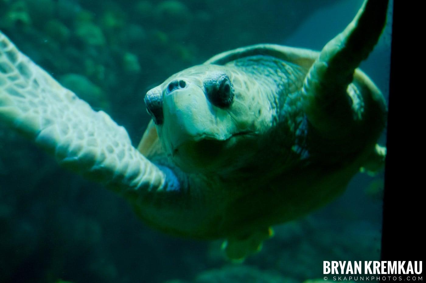 New England Aquarium @ Boston, MA - 6.2.12 (10)