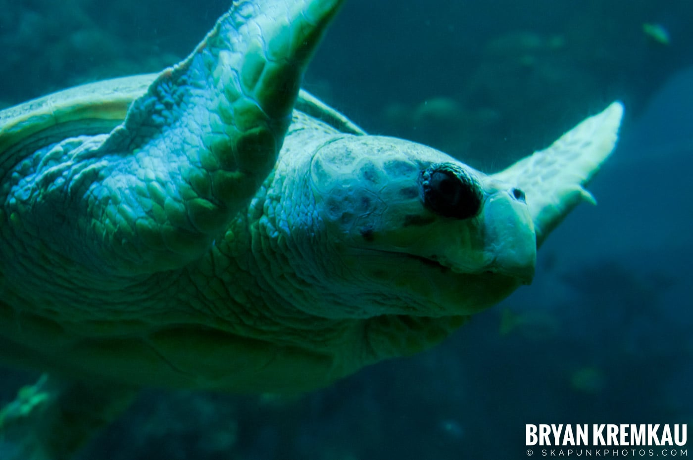 New England Aquarium @ Boston, MA - 6.2.12 (9)
