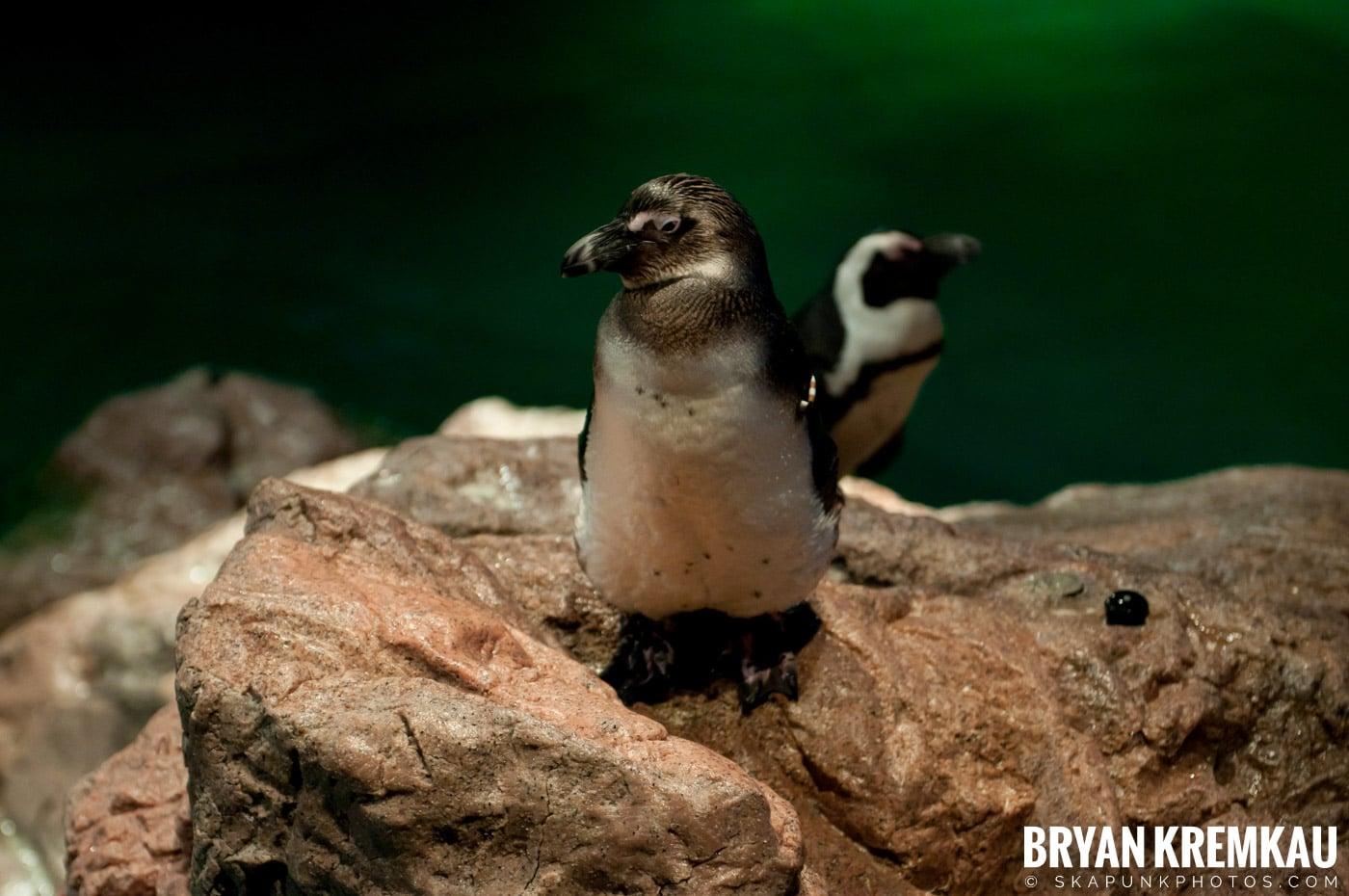 New England Aquarium @ Boston, MA - 6.2.12 (7)