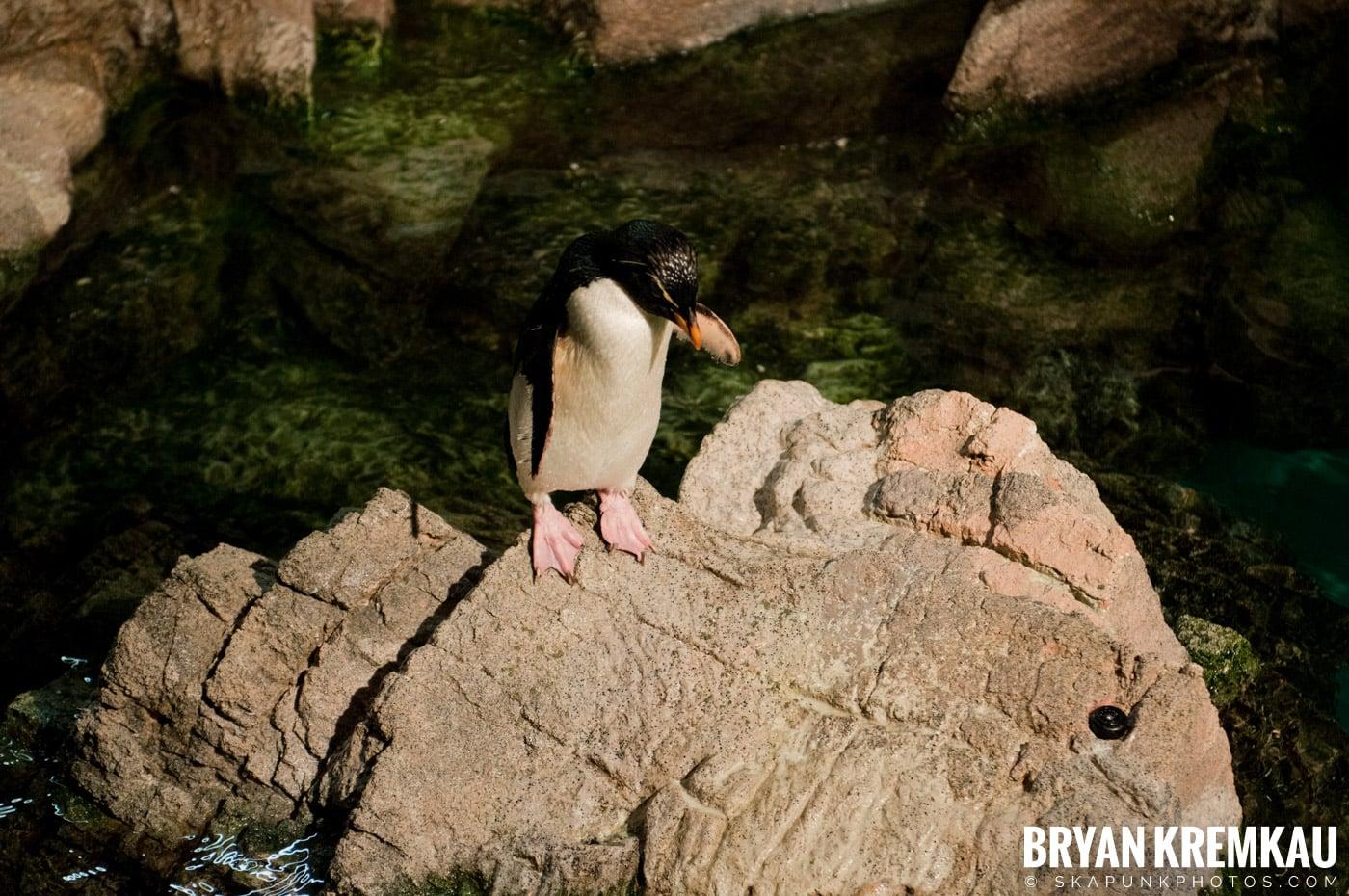 New England Aquarium @ Boston, MA - 6.2.12 (6)
