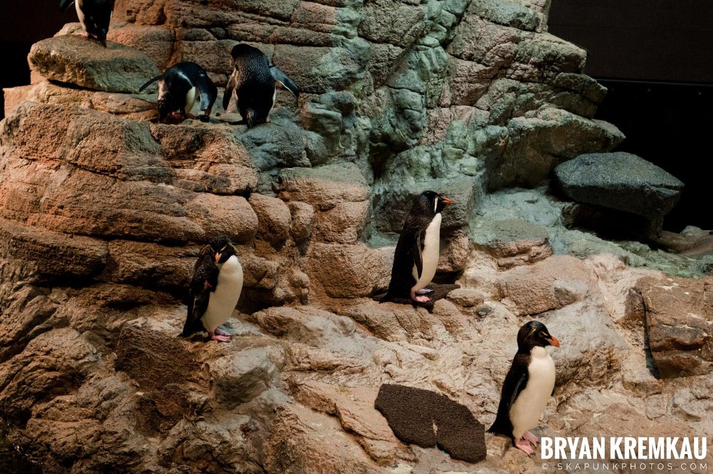 New England Aquarium @ Boston, MA - 6.2.12 (5)