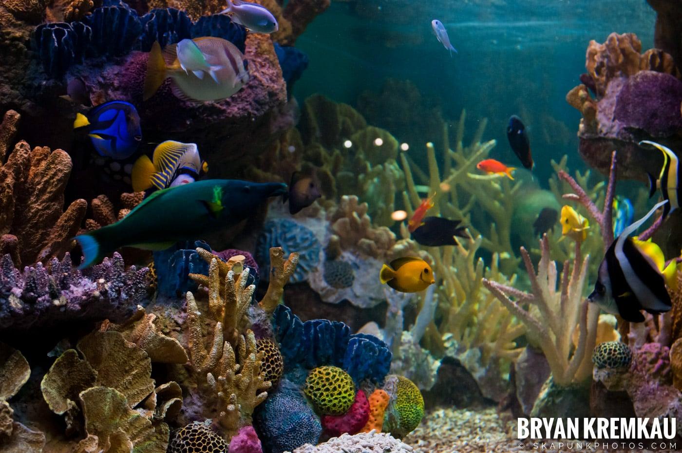 New England Aquarium @ Boston, MA - 6.2.12 (4)