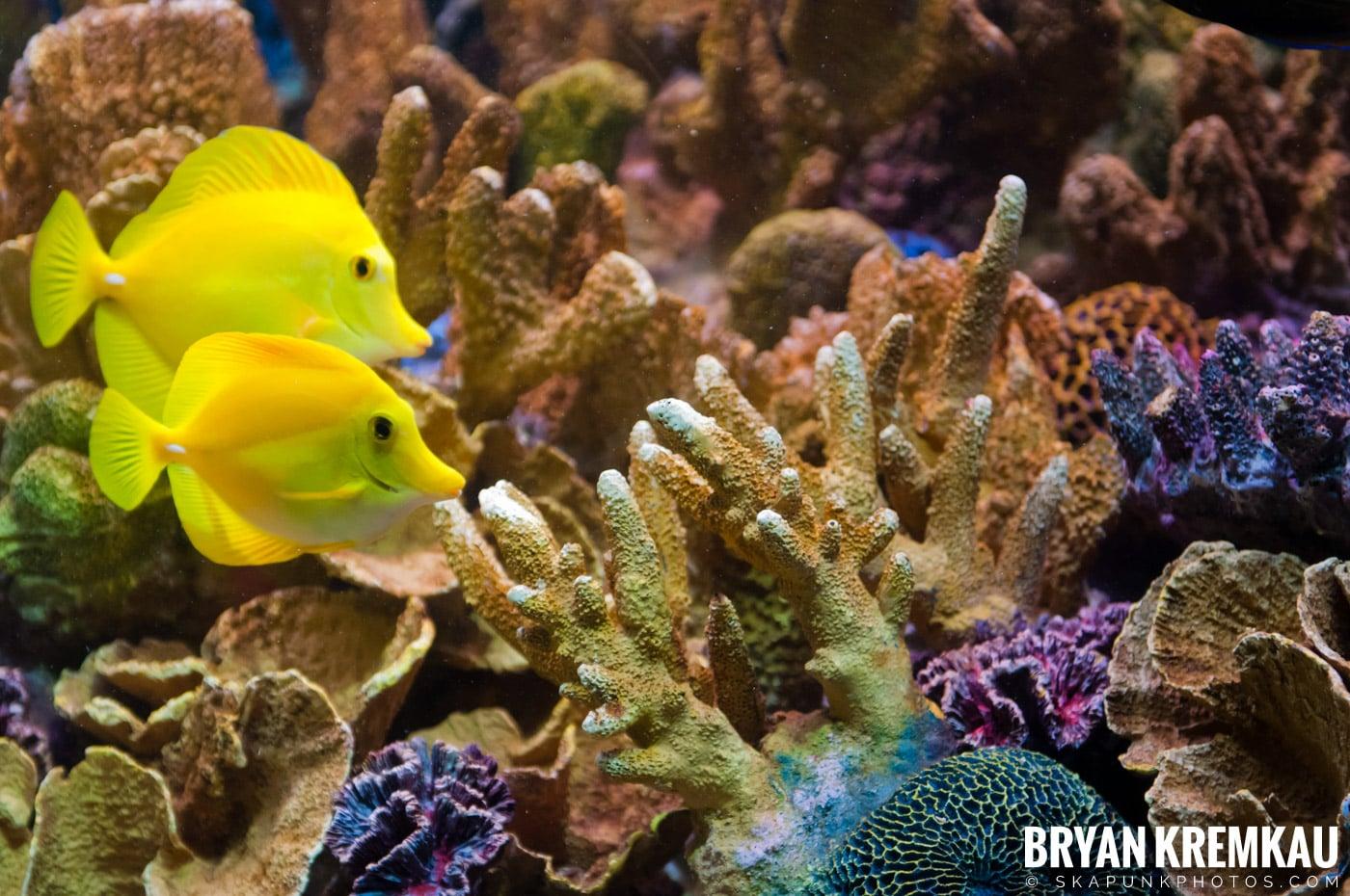 New England Aquarium @ Boston, MA - 6.2.12 (3)
