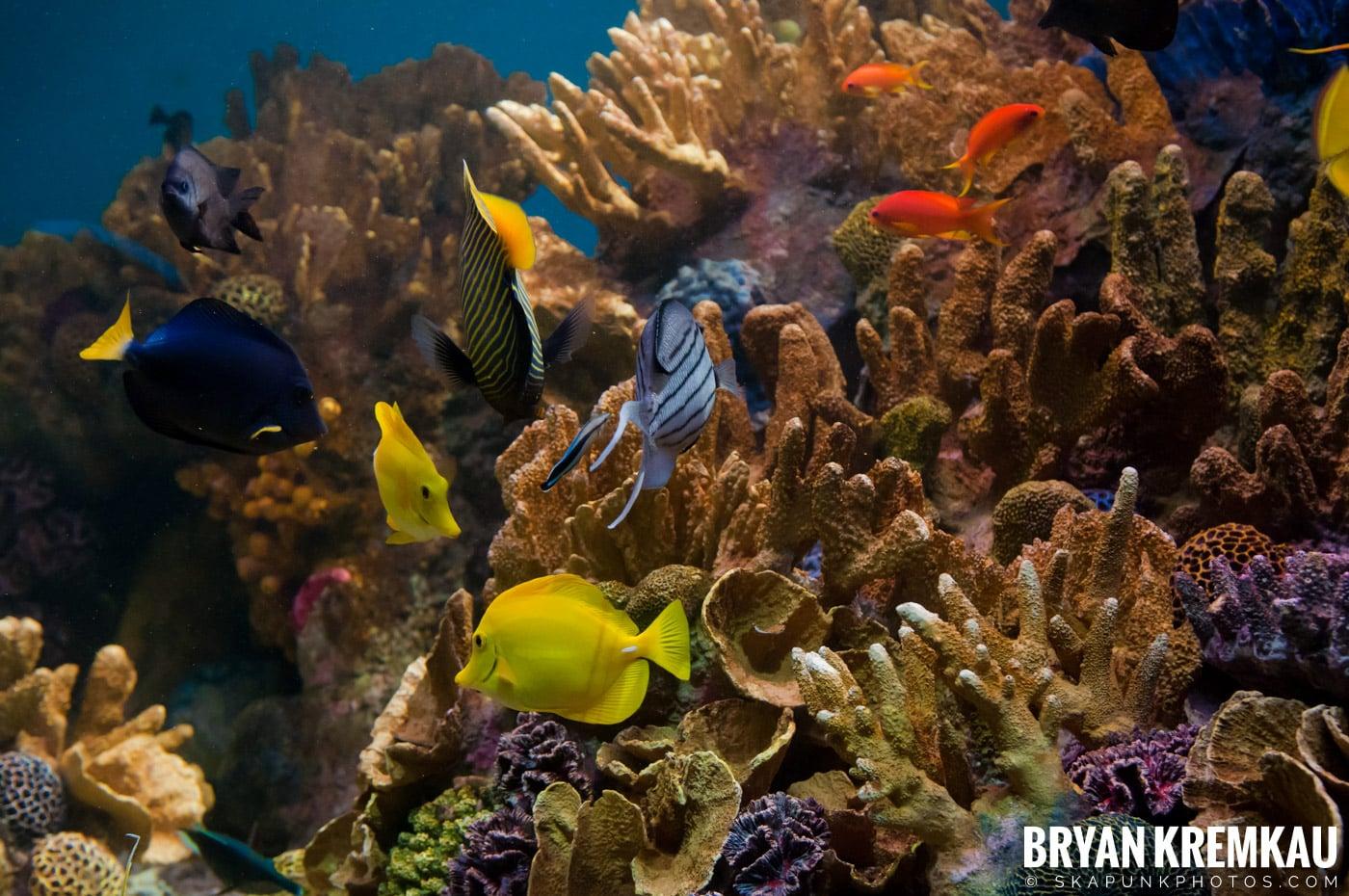 New England Aquarium @ Boston, MA - 6.2.12 (2)