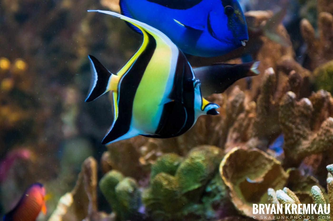 New England Aquarium @ Boston, MA - 6.2.12 (1)