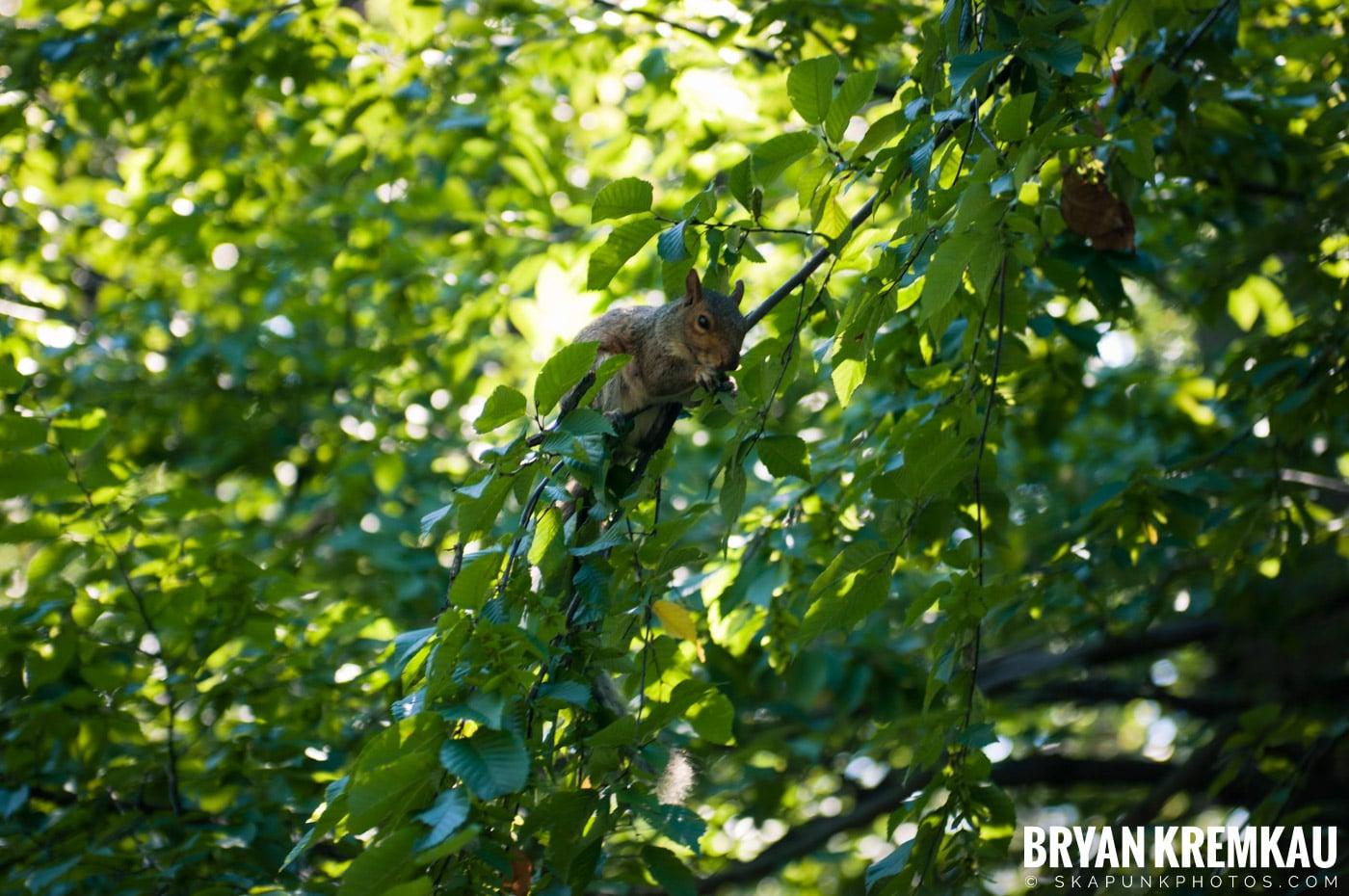 Central Park @ New York, NY - 9.9.12 (19)