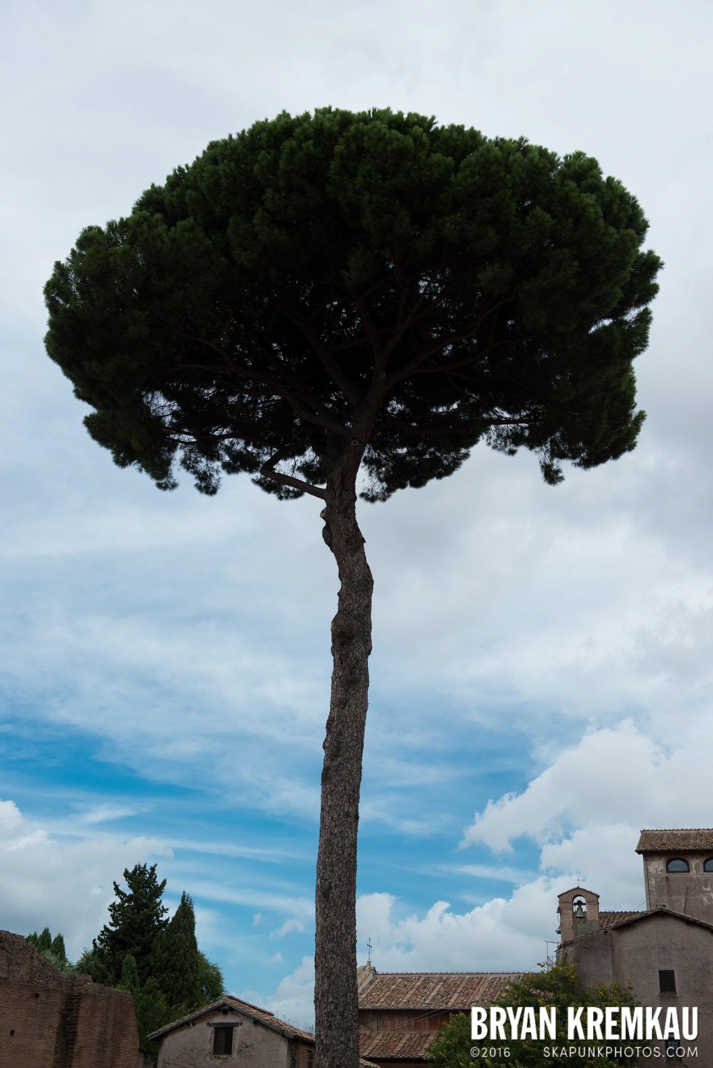 Italy Vacation - Day 2: Rome - 9.10.13 (79)