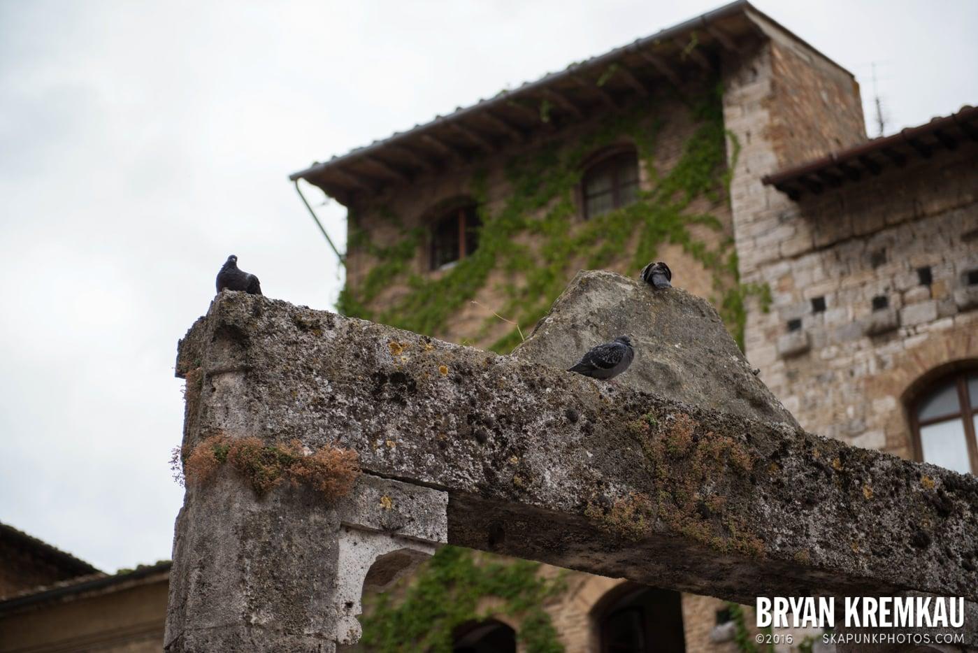 Italy Vacation - Day 8: Siena, San Gimignano, Chianti, Pisa - 9.16.13 (48)