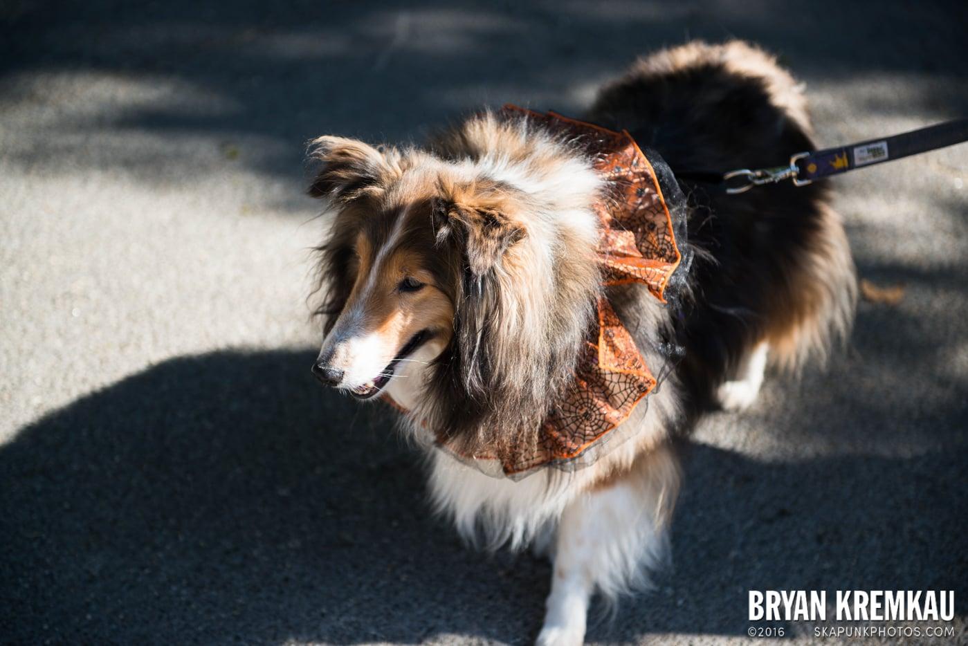 Tompkins Square Halloween Dog Parade 2013 @ Tompkins Square Park, NYC - 10.26.13 (76)