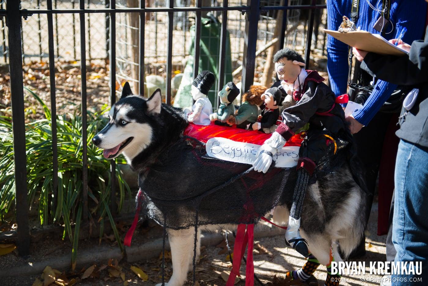 Tompkins Square Halloween Dog Parade 2013 @ Tompkins Square Park, NYC - 10.26.13 (75)