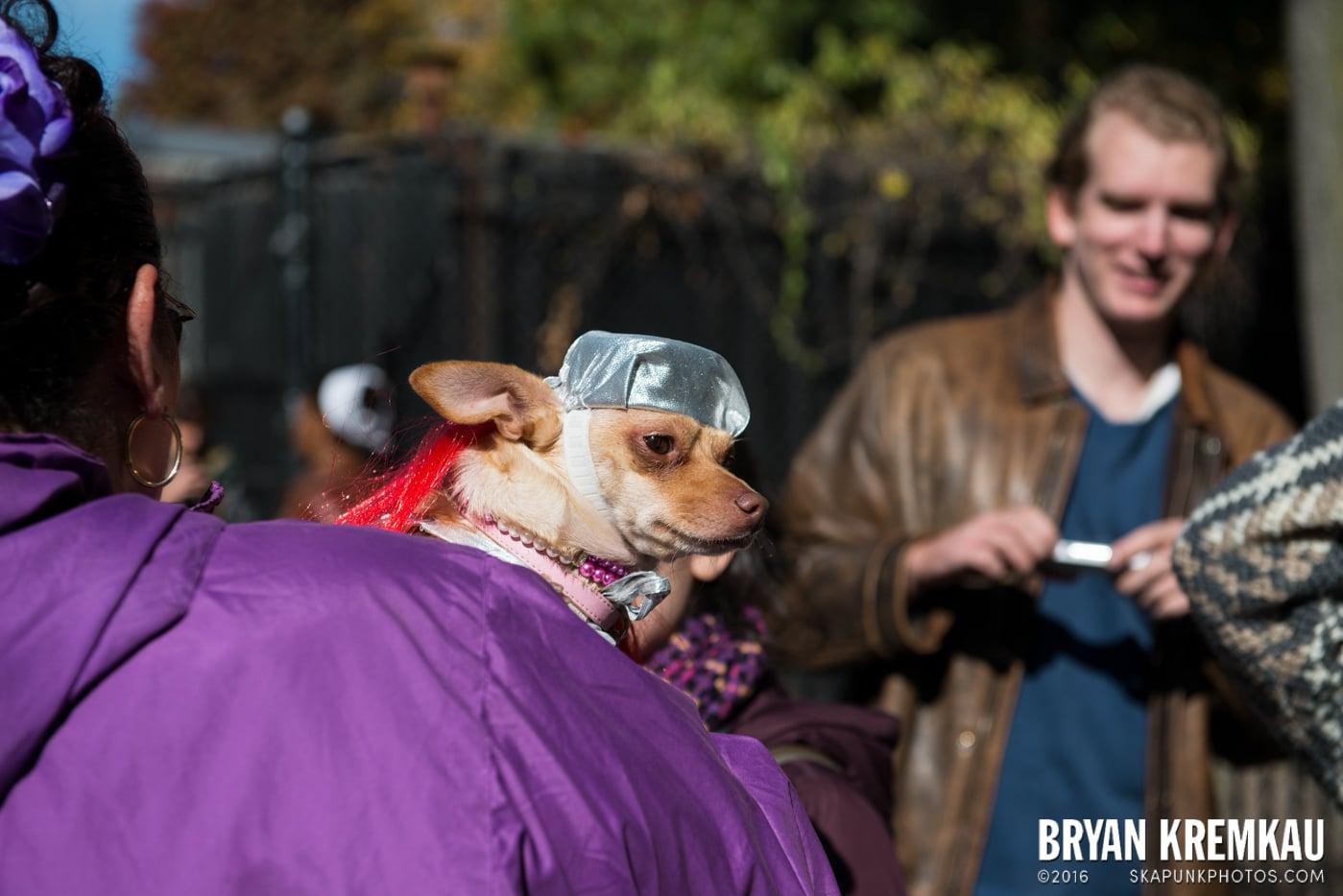 Tompkins Square Halloween Dog Parade 2013 @ Tompkins Square Park, NYC - 10.26.13 (74)