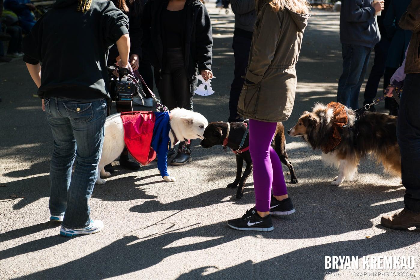 Tompkins Square Halloween Dog Parade 2013 @ Tompkins Square Park, NYC - 10.26.13 (73)