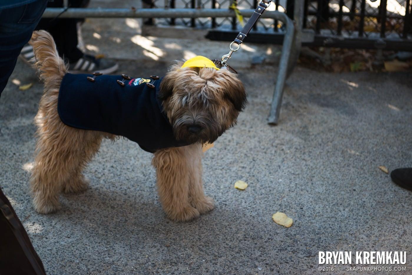 Tompkins Square Halloween Dog Parade 2013 @ Tompkins Square Park, NYC - 10.26.13 (72)