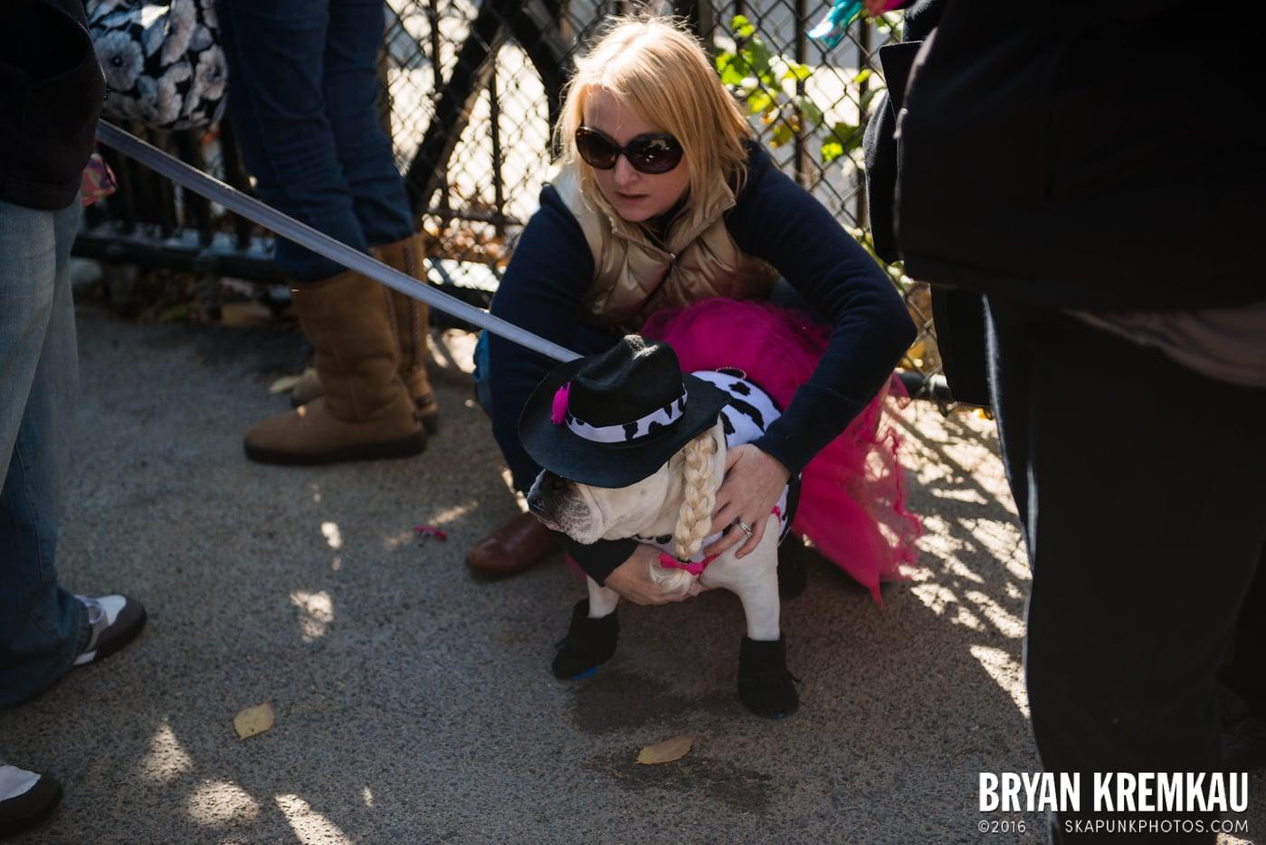 Tompkins Square Halloween Dog Parade 2013 @ Tompkins Square Park, NYC - 10.26.13 (71)