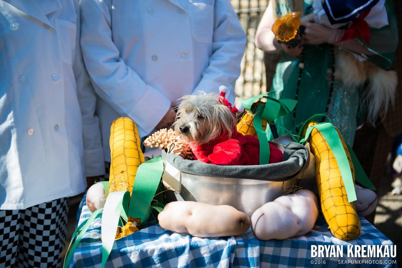 Tompkins Square Halloween Dog Parade 2013 @ Tompkins Square Park, NYC - 10.26.13 (69)
