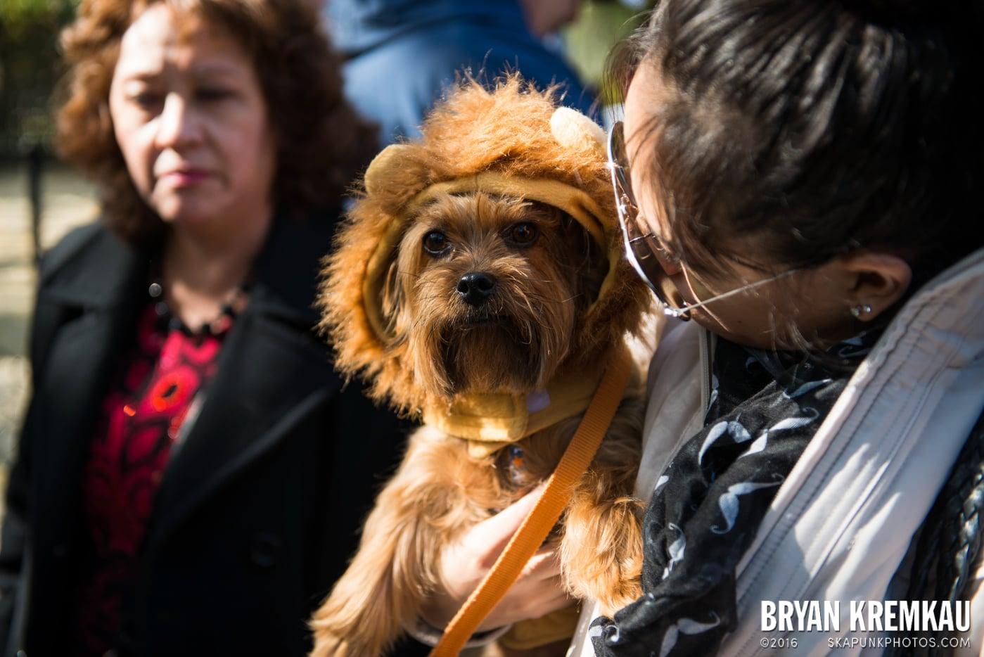 Tompkins Square Halloween Dog Parade 2013 @ Tompkins Square Park, NYC - 10.26.13 (66)