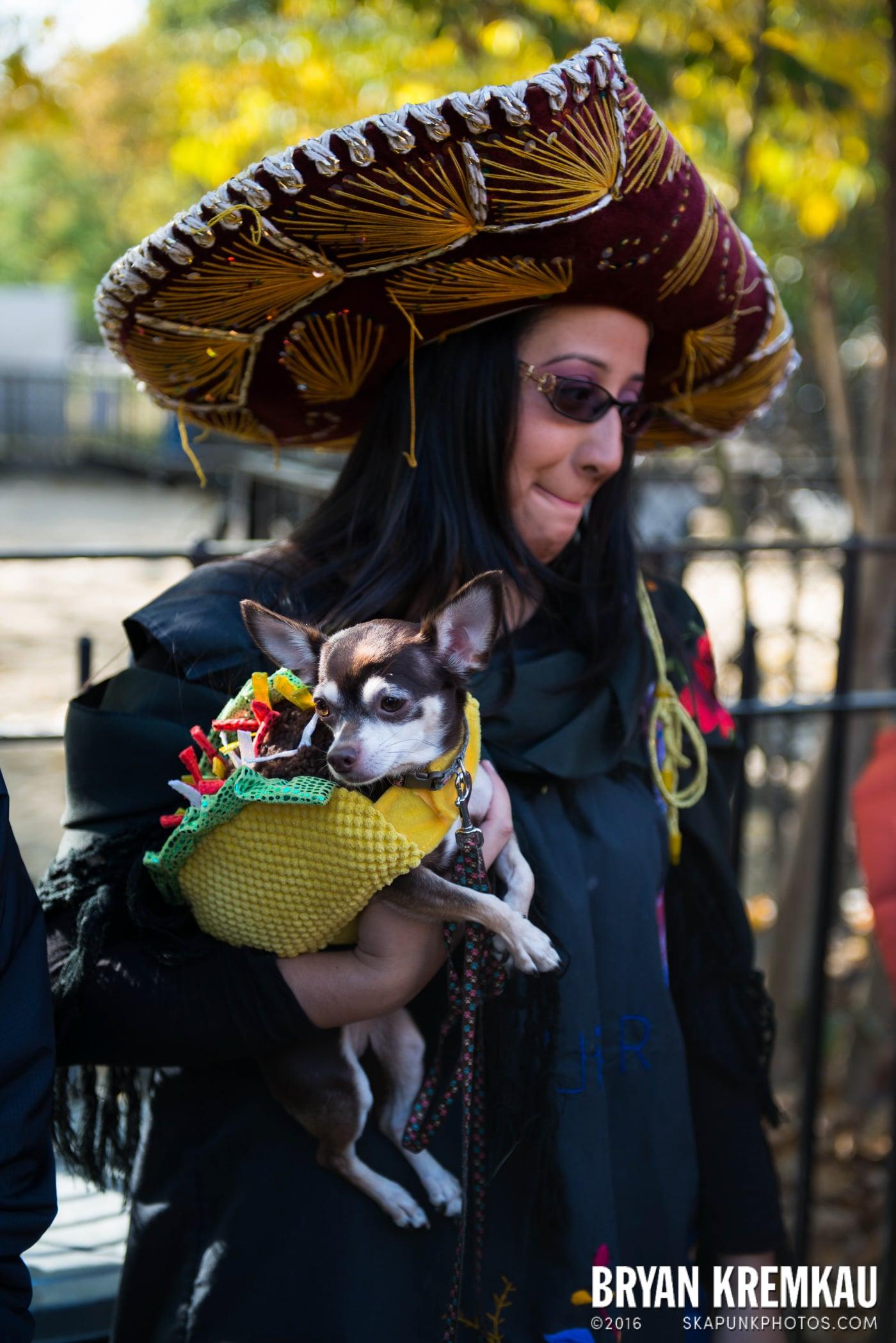 Tompkins Square Halloween Dog Parade 2013 @ Tompkins Square Park, NYC - 10.26.13 (64)