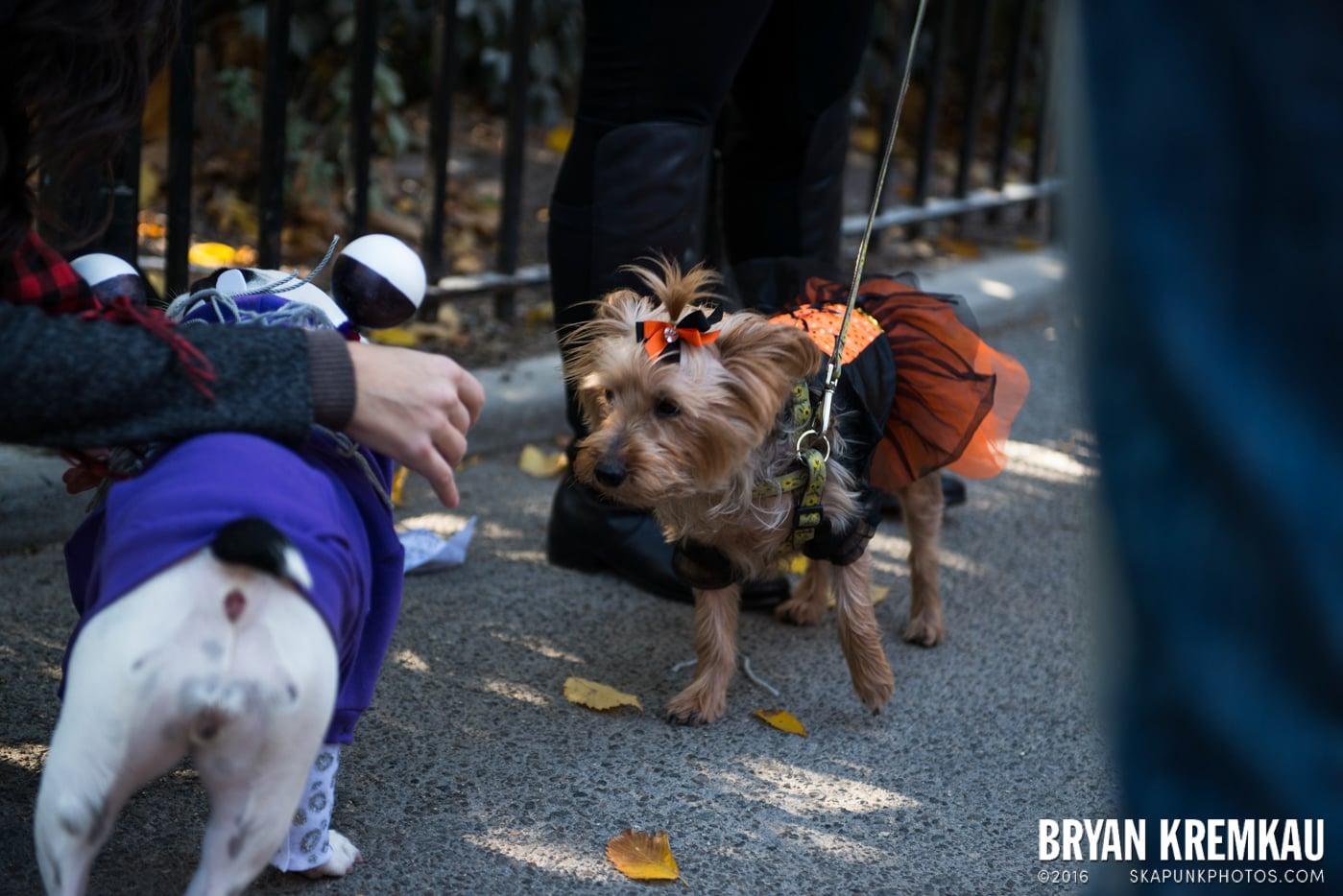 Tompkins Square Halloween Dog Parade 2013 @ Tompkins Square Park, NYC - 10.26.13 (63)