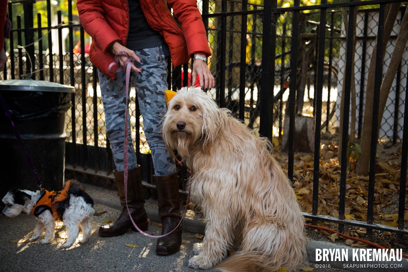 Tompkins Square Halloween Dog Parade 2013 @ Tompkins Square Park, NYC - 10.26.13 (62)