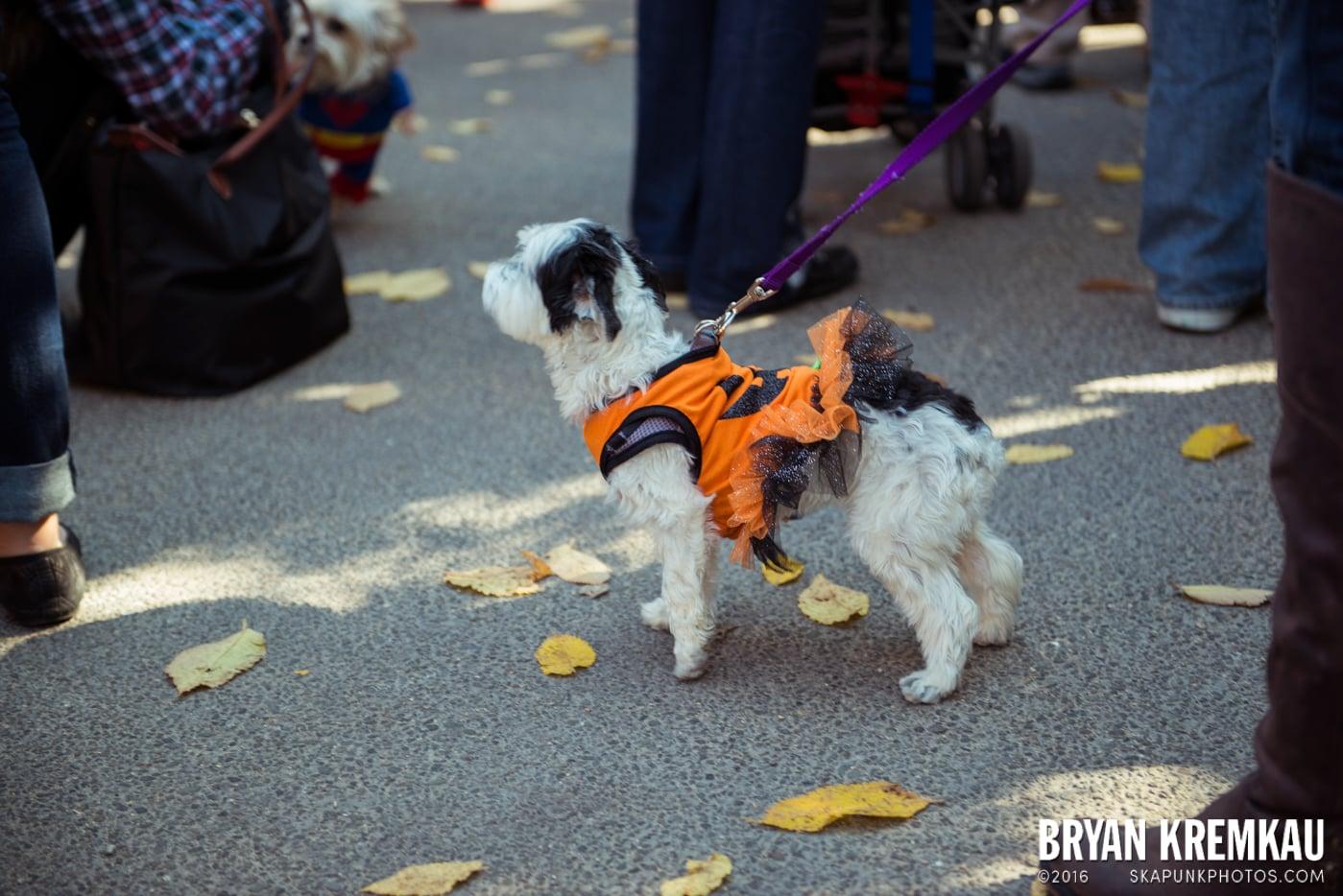 Tompkins Square Halloween Dog Parade 2013 @ Tompkins Square Park, NYC - 10.26.13 (61)