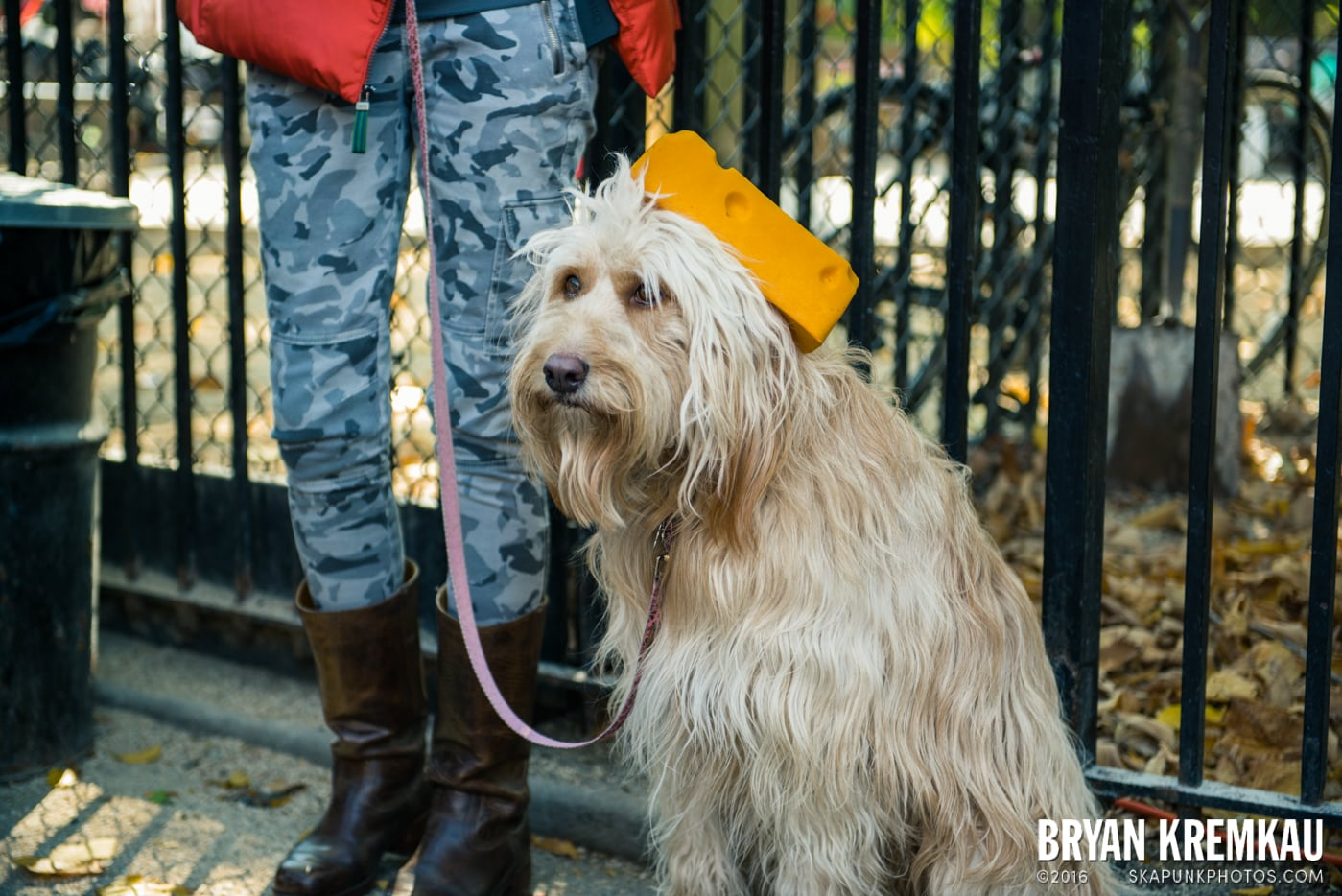Tompkins Square Halloween Dog Parade 2013 @ Tompkins Square Park, NYC - 10.26.13 (60)