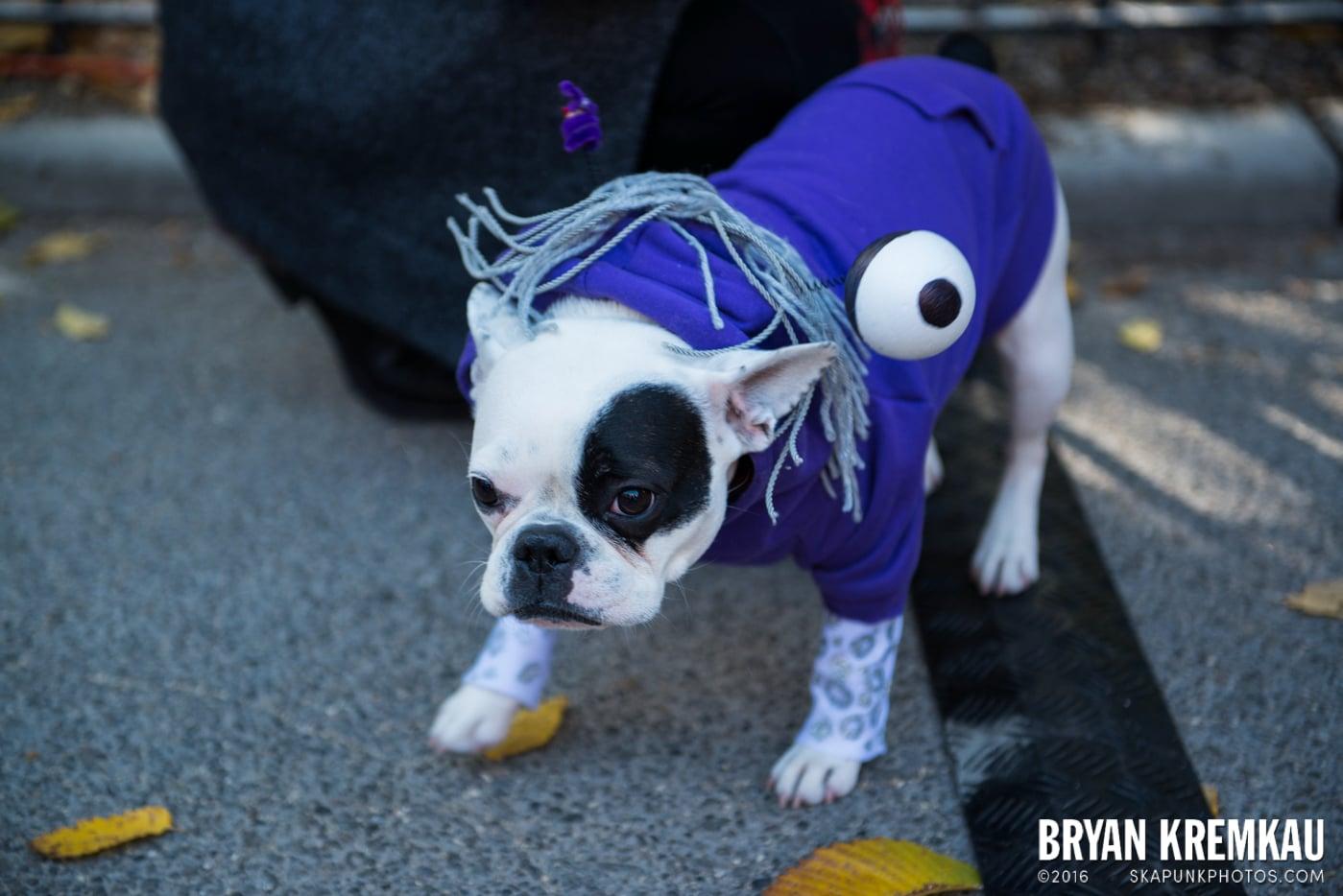 Tompkins Square Halloween Dog Parade 2013 @ Tompkins Square Park, NYC - 10.26.13 (59)
