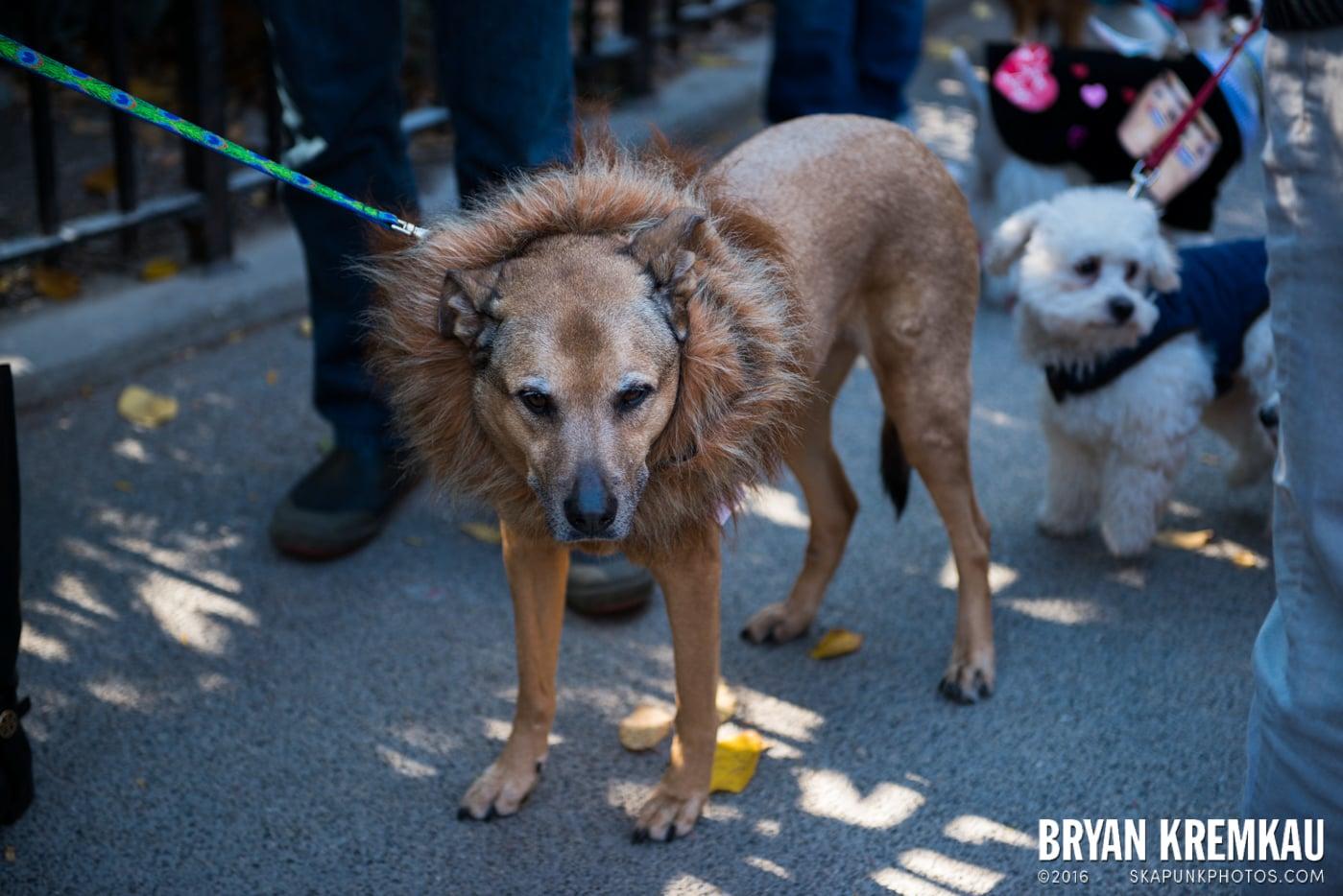 Tompkins Square Halloween Dog Parade 2013 @ Tompkins Square Park, NYC - 10.26.13 (57)
