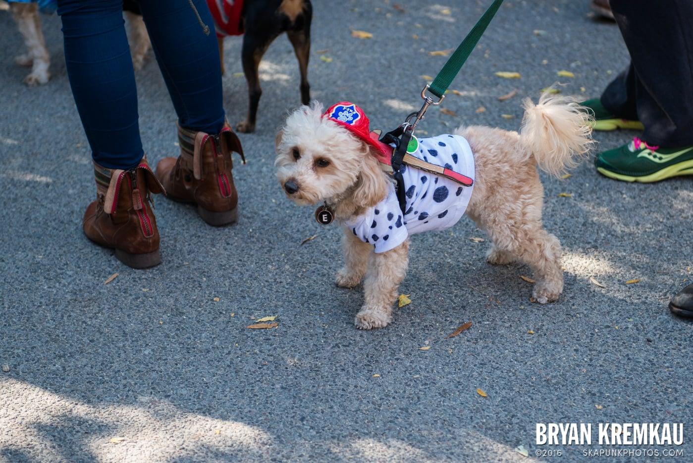 Tompkins Square Halloween Dog Parade 2013 @ Tompkins Square Park, NYC - 10.26.13 (56)