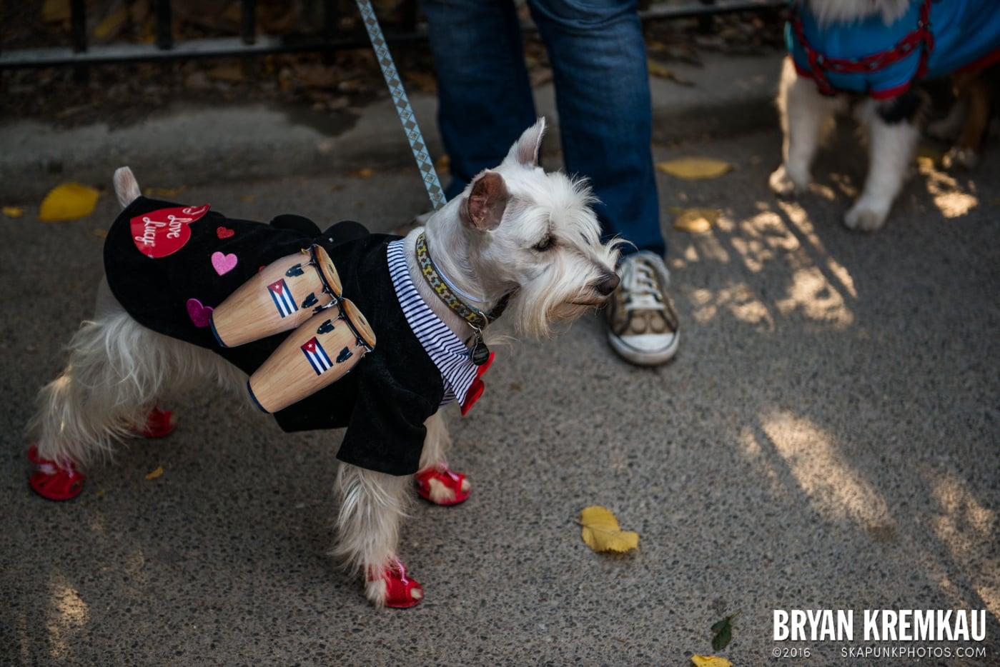 Tompkins Square Halloween Dog Parade 2013 @ Tompkins Square Park, NYC - 10.26.13 (54)