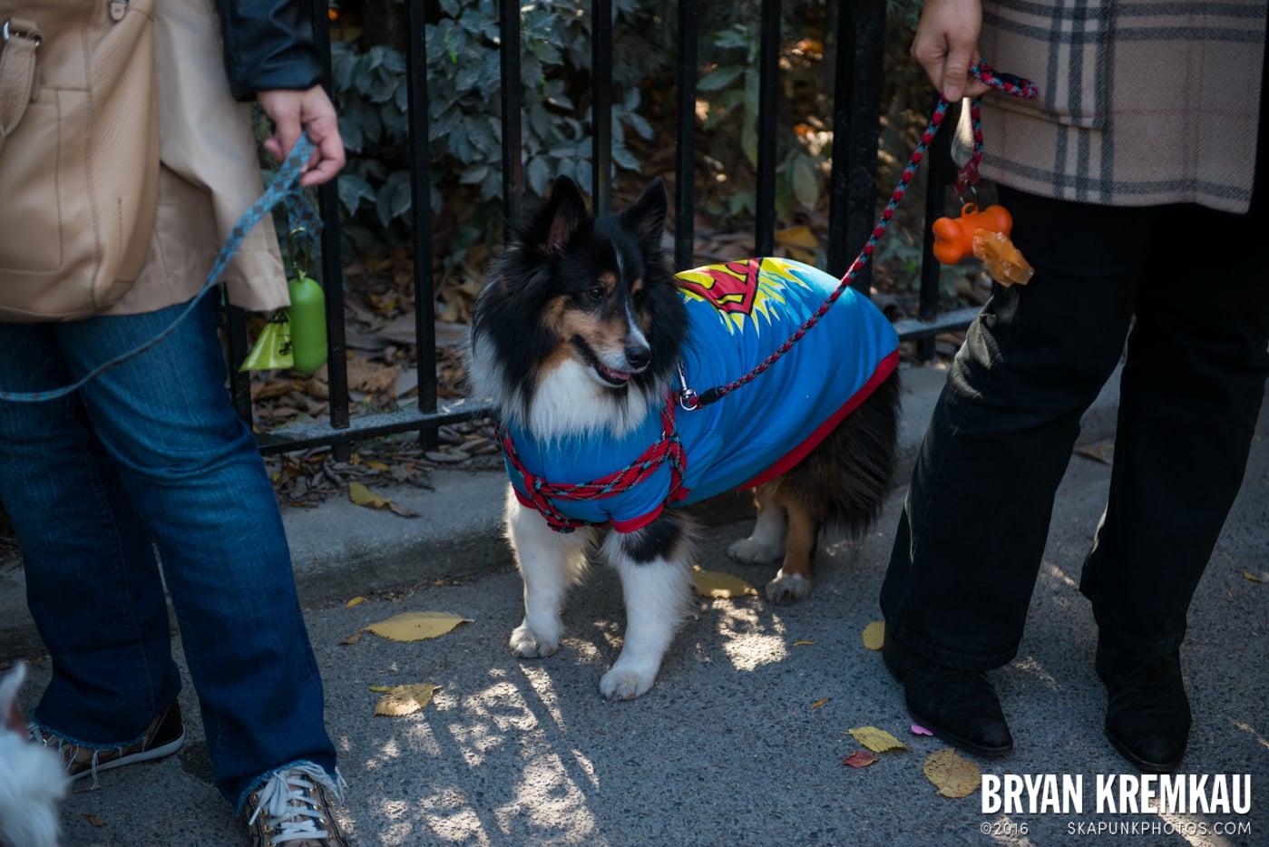 Tompkins Square Halloween Dog Parade 2013 @ Tompkins Square Park, NYC - 10.26.13 (53)