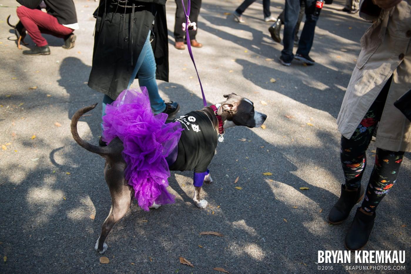 Tompkins Square Halloween Dog Parade 2013 @ Tompkins Square Park, NYC - 10.26.13 (51)