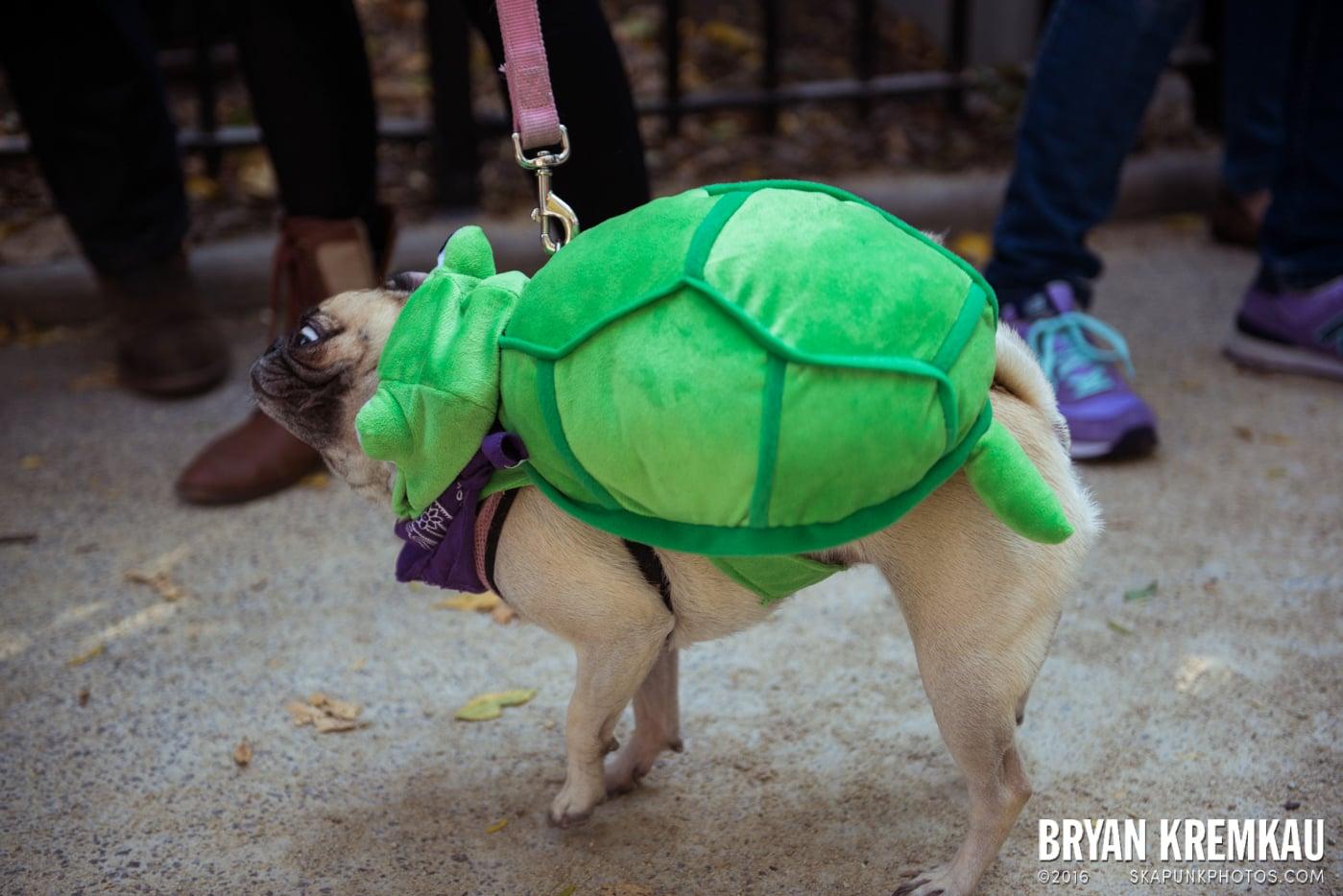 Tompkins Square Halloween Dog Parade 2013 @ Tompkins Square Park, NYC - 10.26.13 (50)