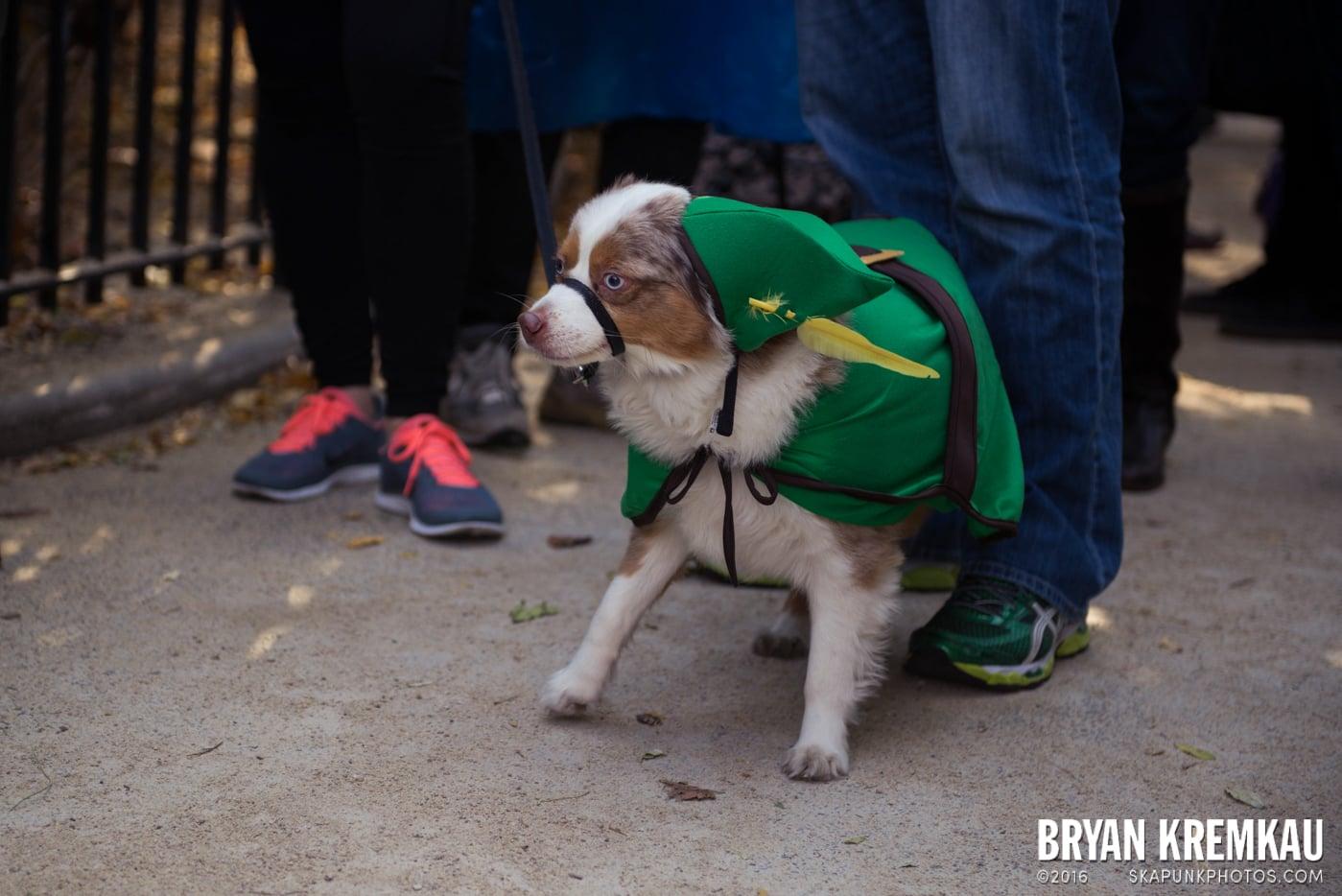 Tompkins Square Halloween Dog Parade 2013 @ Tompkins Square Park, NYC - 10.26.13 (49)