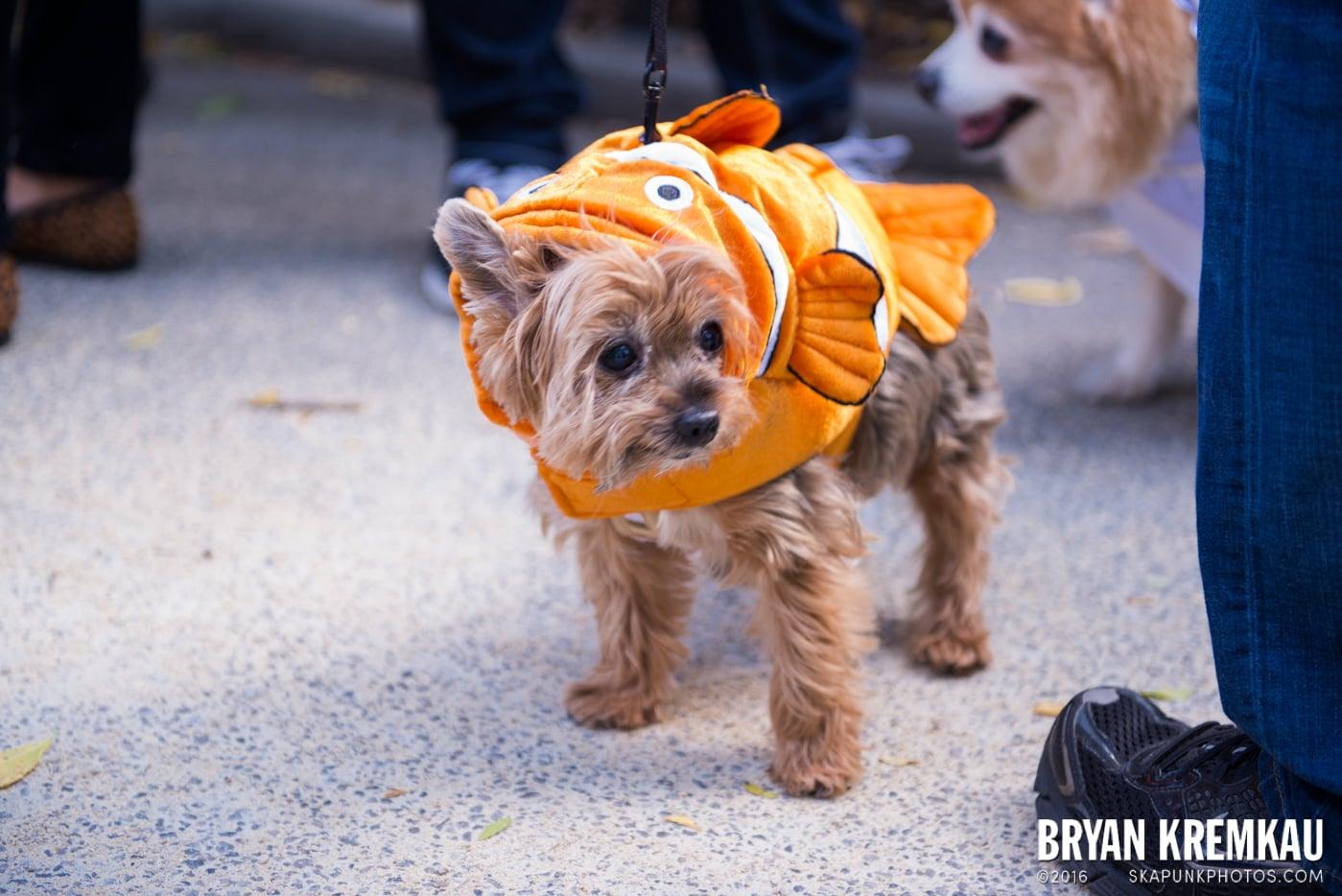 Tompkins Square Halloween Dog Parade 2013 @ Tompkins Square Park, NYC - 10.26.13 (48)