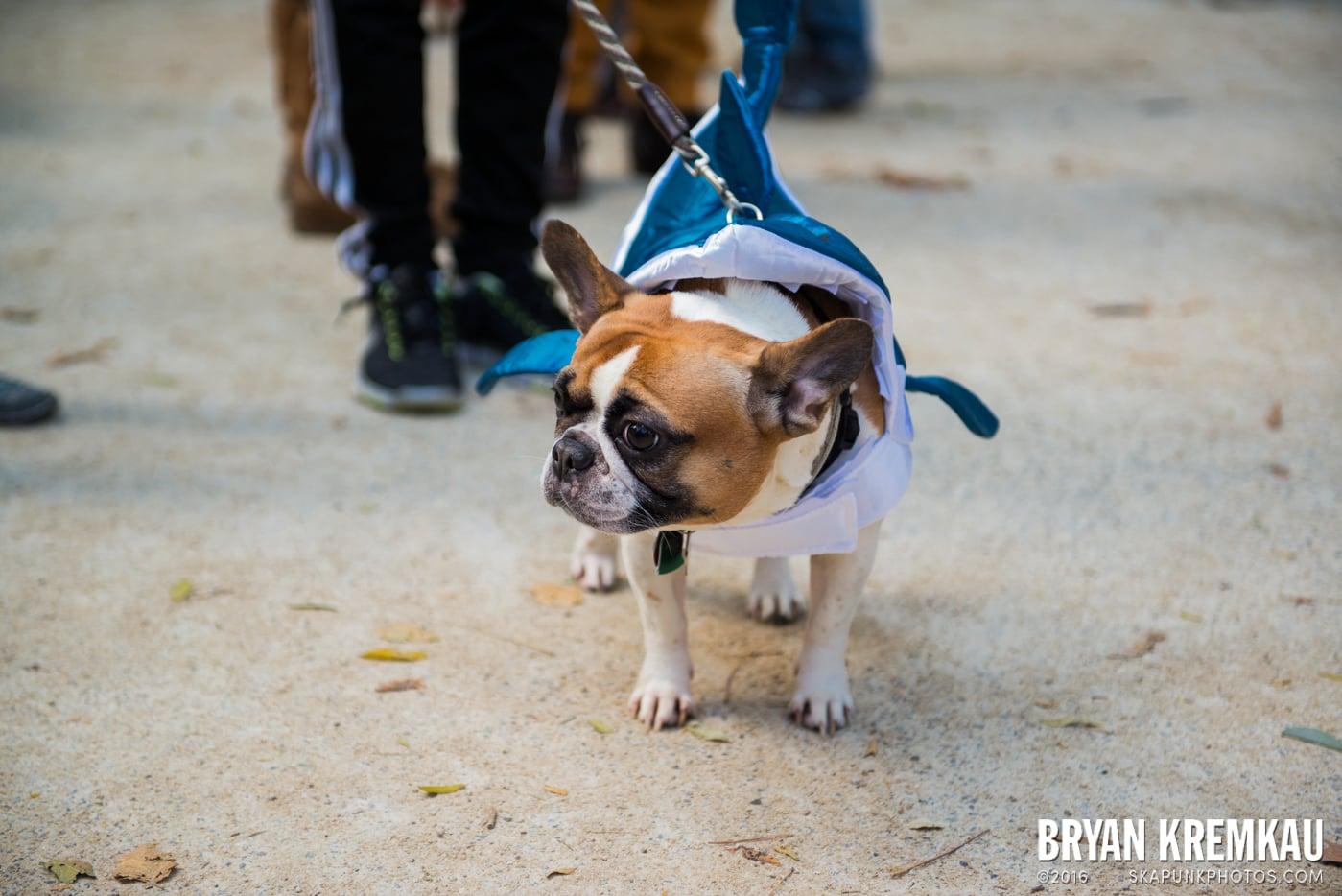 Tompkins Square Halloween Dog Parade 2013 @ Tompkins Square Park, NYC - 10.26.13 (47)