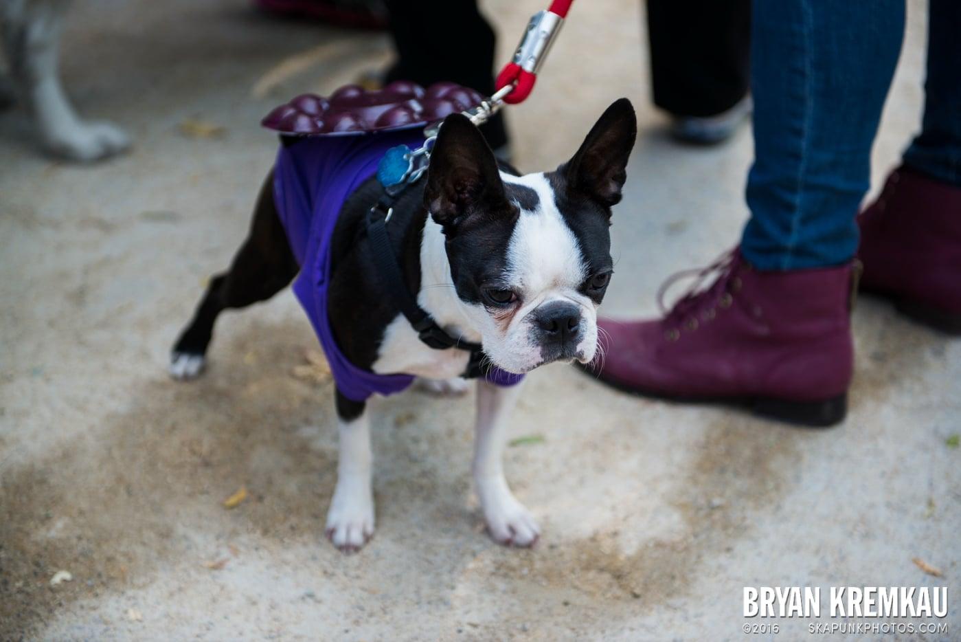 Tompkins Square Halloween Dog Parade 2013 @ Tompkins Square Park, NYC - 10.26.13 (46)