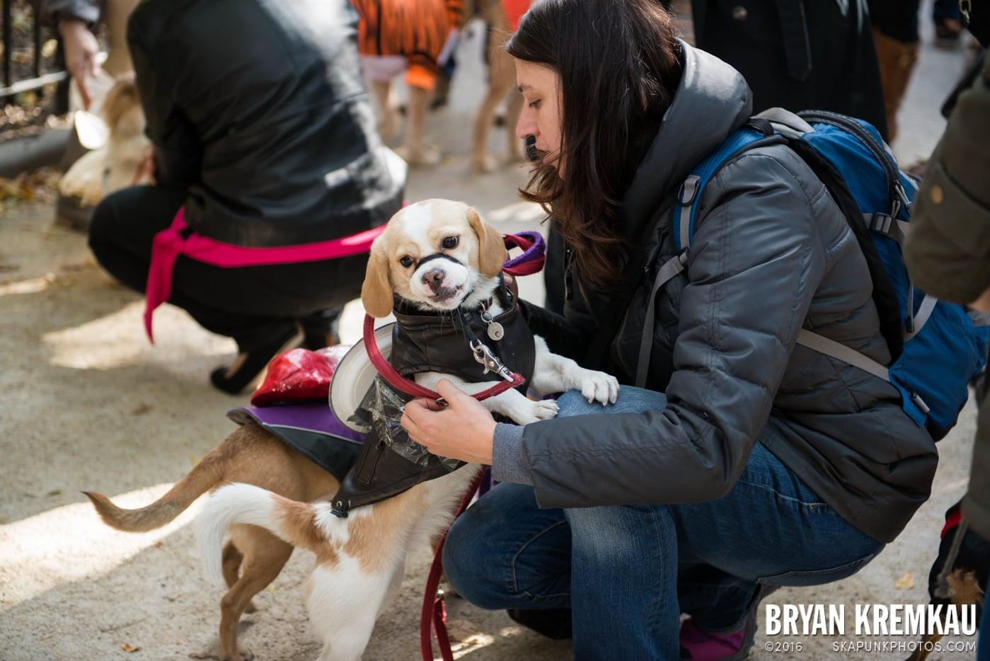 Tompkins Square Halloween Dog Parade 2013 @ Tompkins Square Park, NYC - 10.26.13 (44)