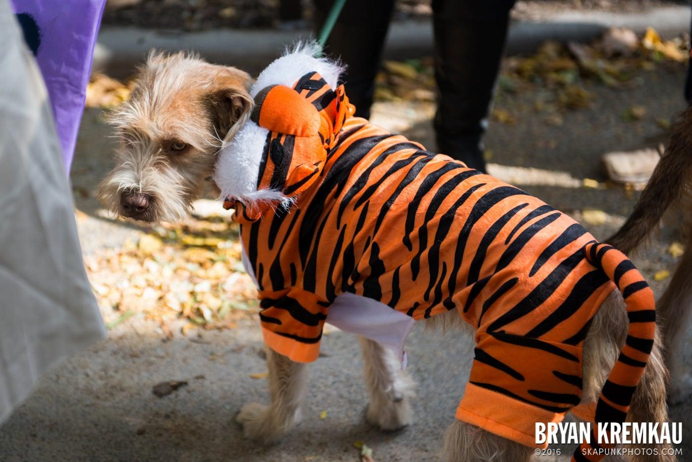 Tompkins Square Halloween Dog Parade 2013 @ Tompkins Square Park, NYC - 10.26.13 (42)