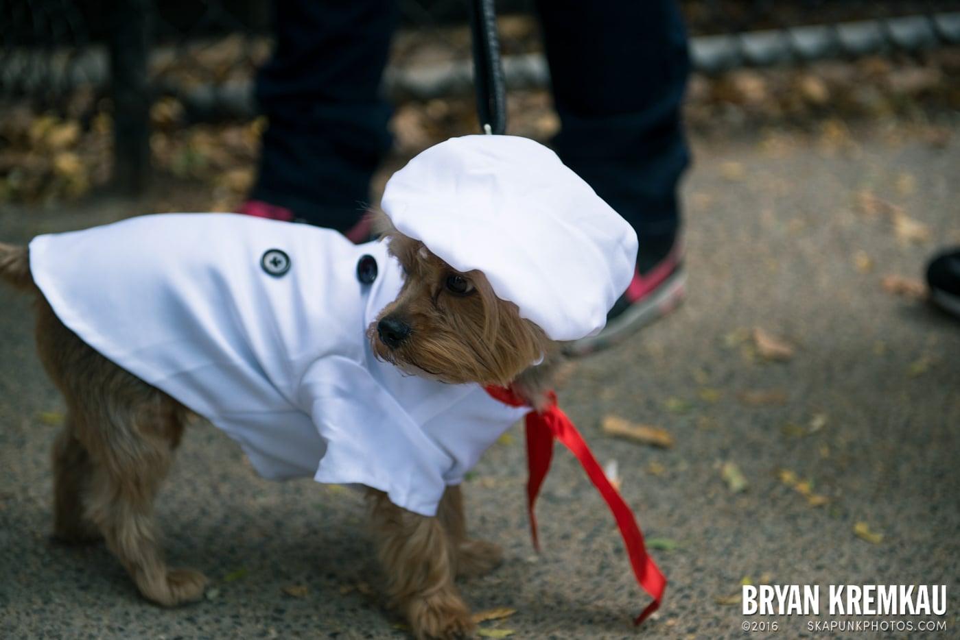 Tompkins Square Halloween Dog Parade 2013 @ Tompkins Square Park, NYC - 10.26.13 (40)
