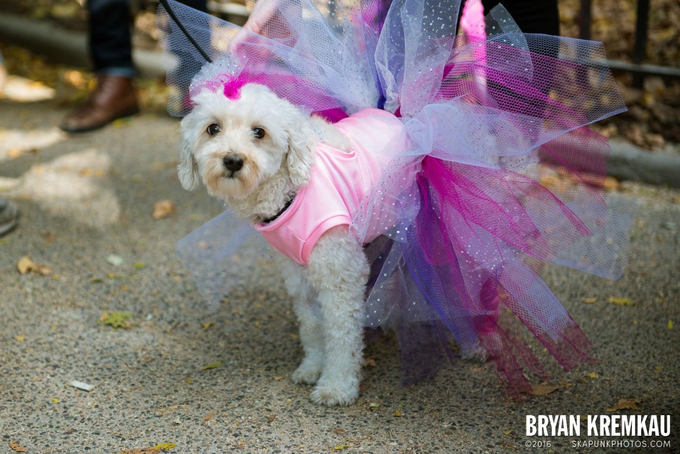 Tompkins Square Halloween Dog Parade 2013 @ Tompkins Square Park, NYC - 10.26.13 (39)