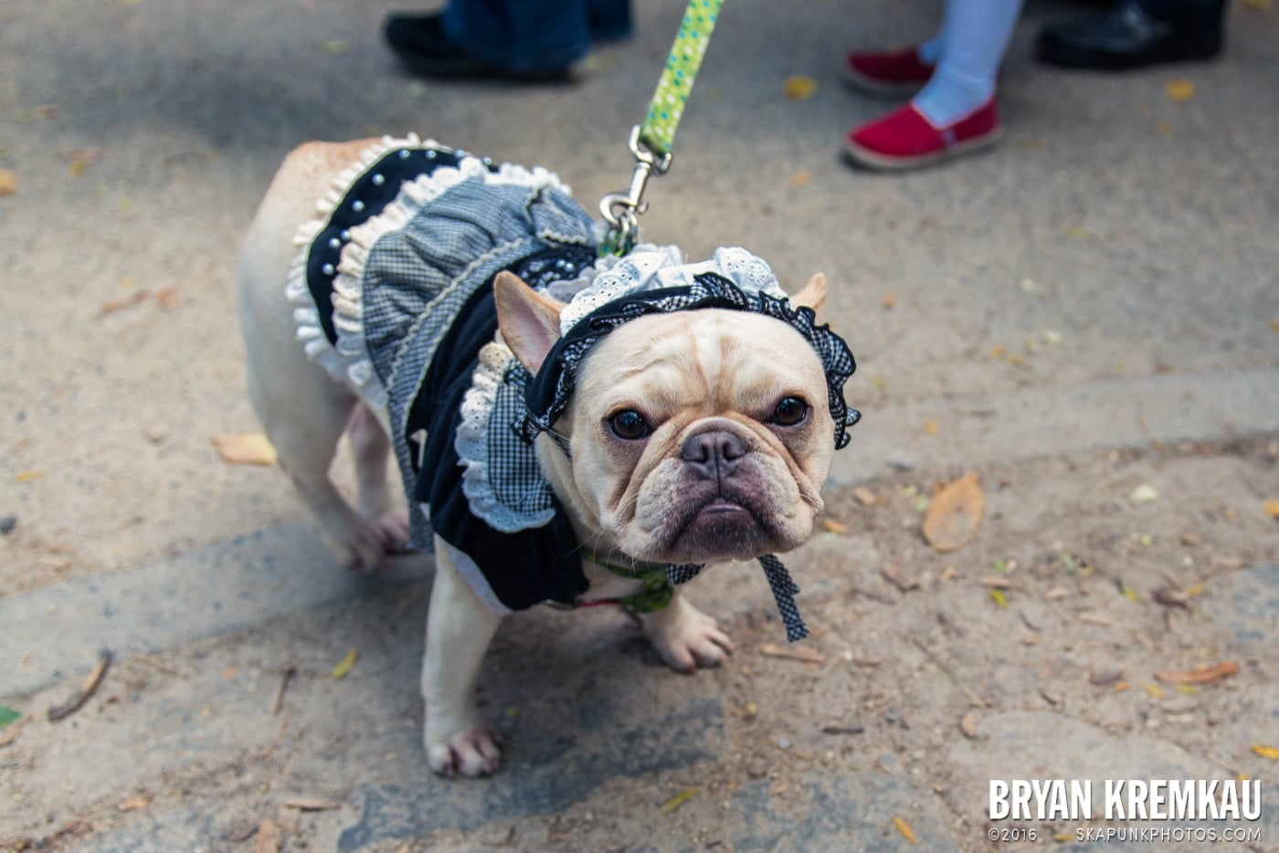Tompkins Square Halloween Dog Parade 2013 @ Tompkins Square Park, NYC - 10.26.13 (36)