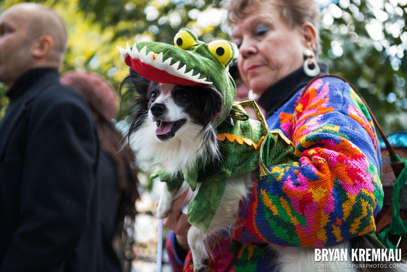 Tompkins Square Halloween Dog Parade 2013 @ Tompkins Square Park, NYC - 10.26.13 (34)