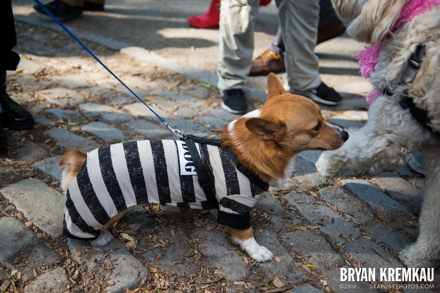 Tompkins Square Halloween Dog Parade 2013 @ Tompkins Square Park, NYC - 10.26.13 (33)