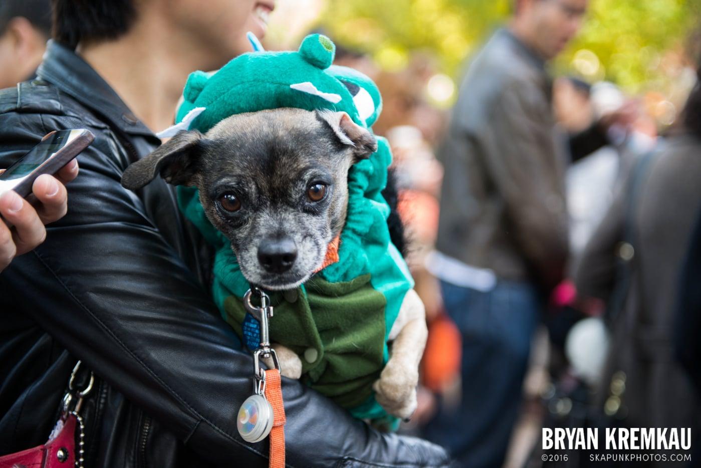 Tompkins Square Halloween Dog Parade 2013 @ Tompkins Square Park, NYC - 10.26.13 (31)
